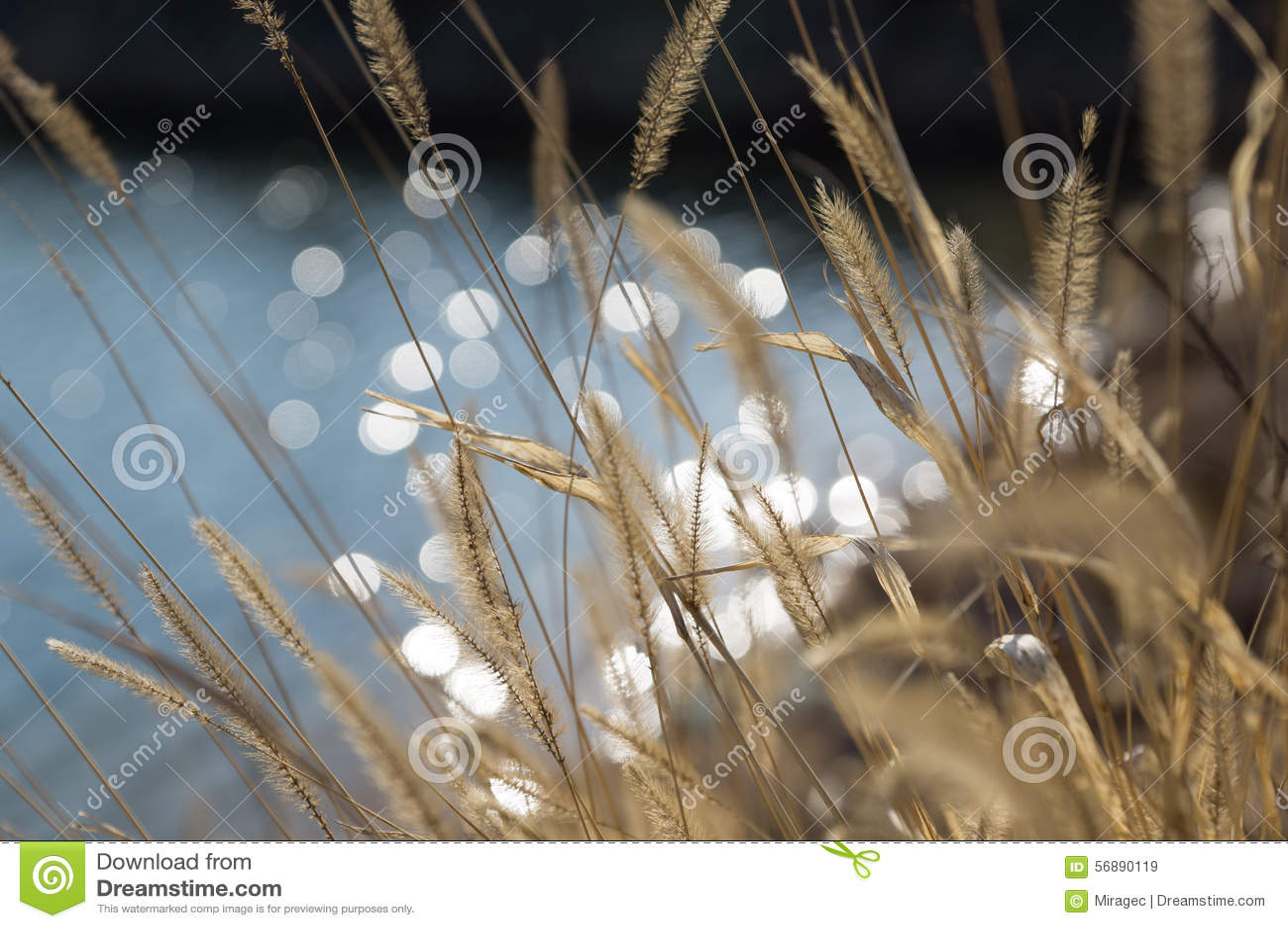 Priorità bassa molle dell erba di estate