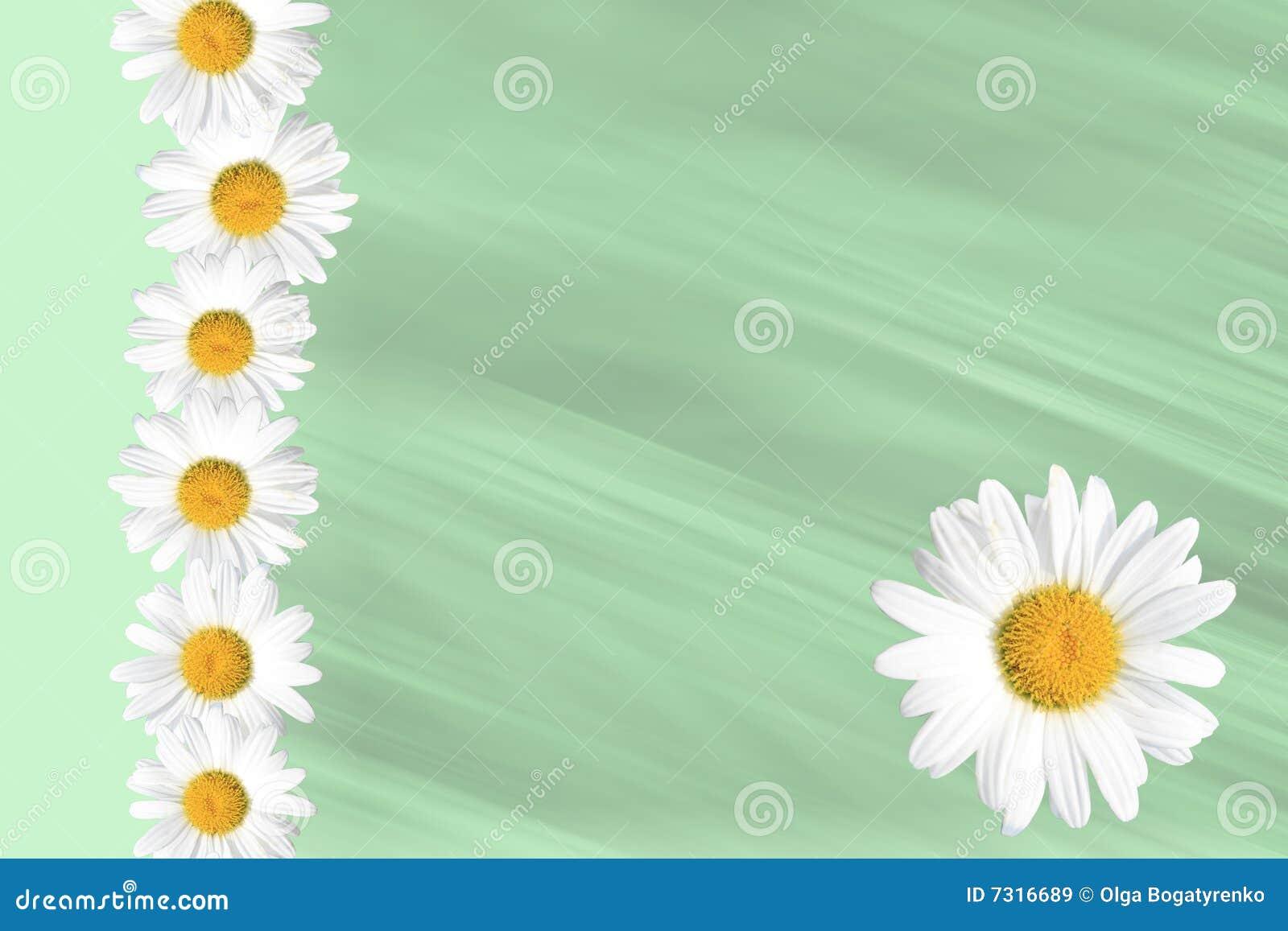 Priorità bassa stagionale della margherita e dell erba di estate