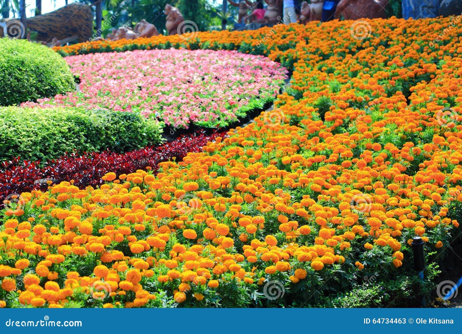 Priorità bassa variopinta del fiore