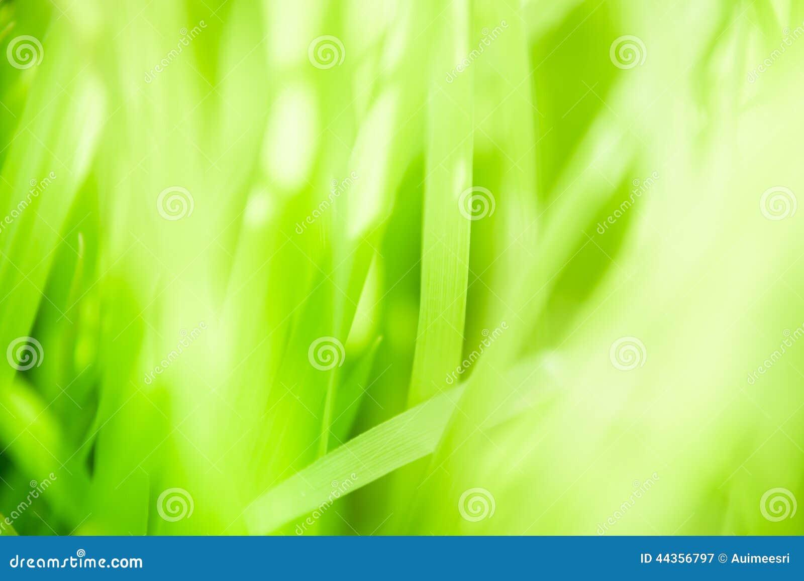 Priorità bassa verde del foglio