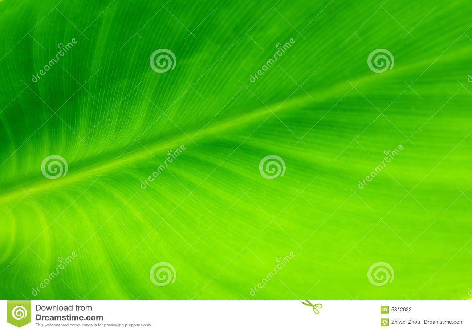 Download Priorità Bassa Verde Di Permesso Fotografia Stock - Immagine di luminoso, giorno: 5312622