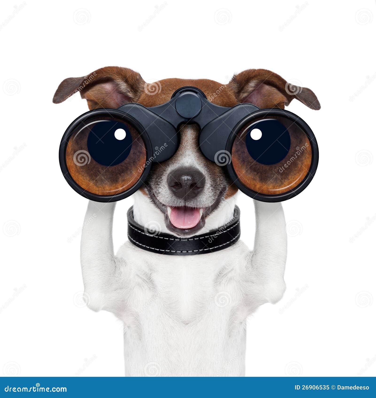 Prismáticos que buscan la mirada observando el perro