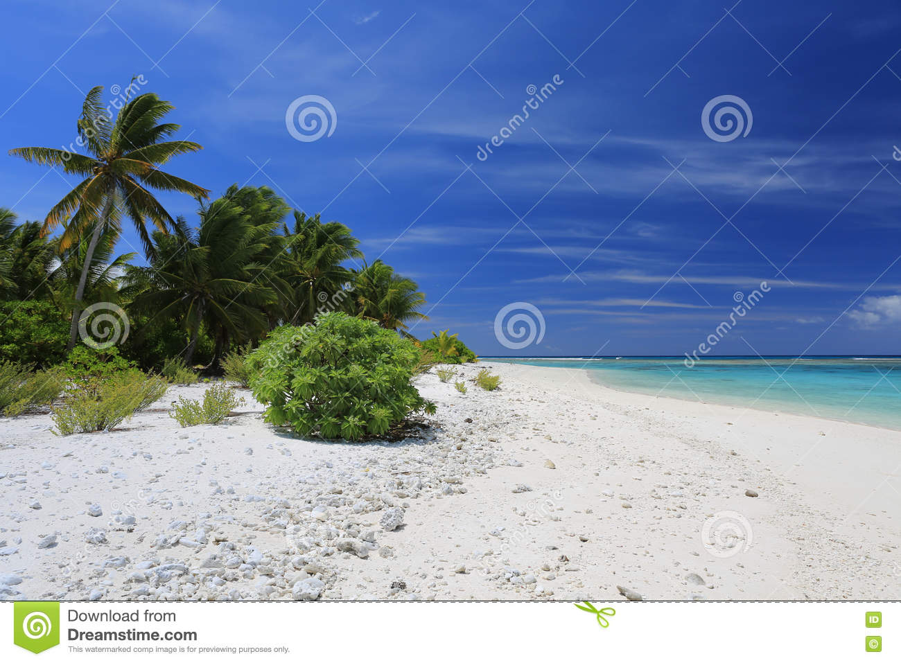 Pristine Remote Coco Palm Beach, Christmas Island, Kiribati Stock ...
