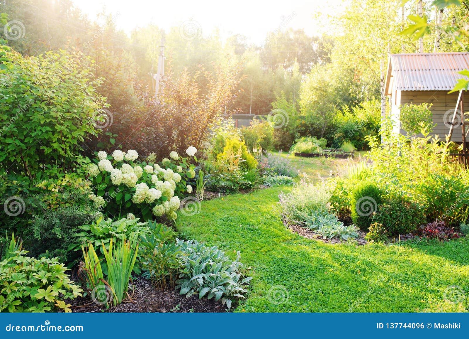 Privat trädgård för sommar med att blomma vanliga hortensian Annabelle