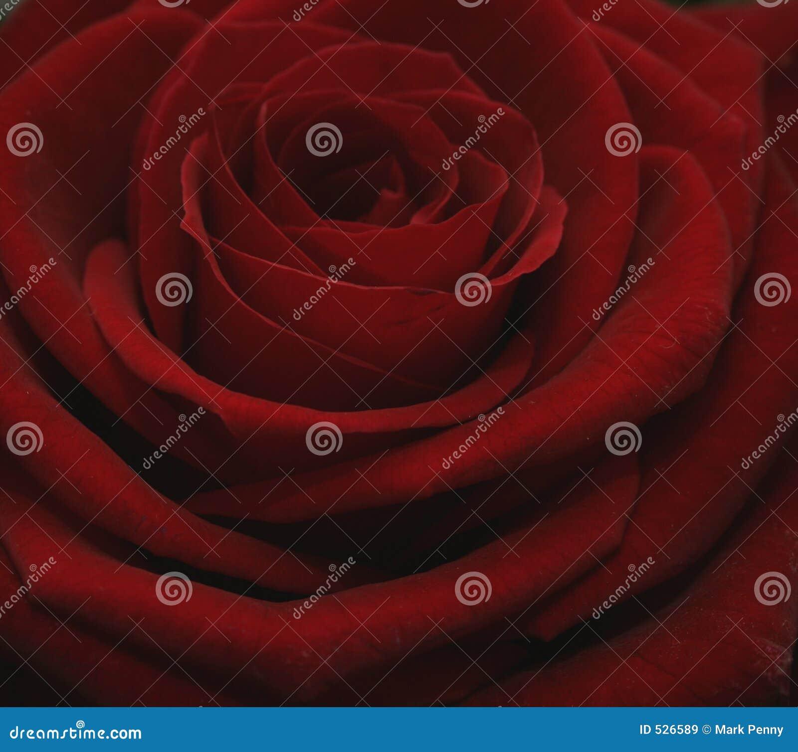 Prix grande Rosa