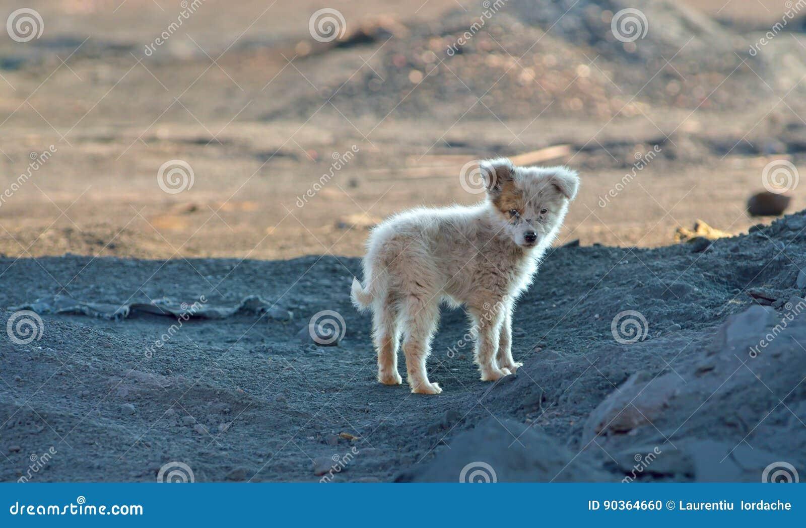 Prożniaczy szczeniaka pies