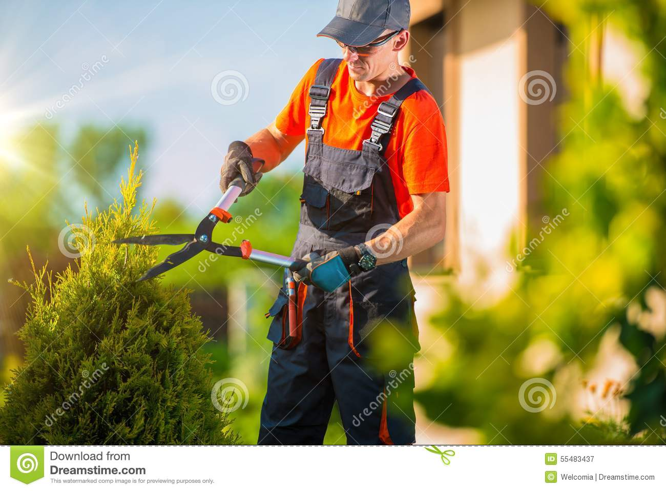 Garden Bush: Pro Gardener Plants Trim Stock Image. Image Of Tool