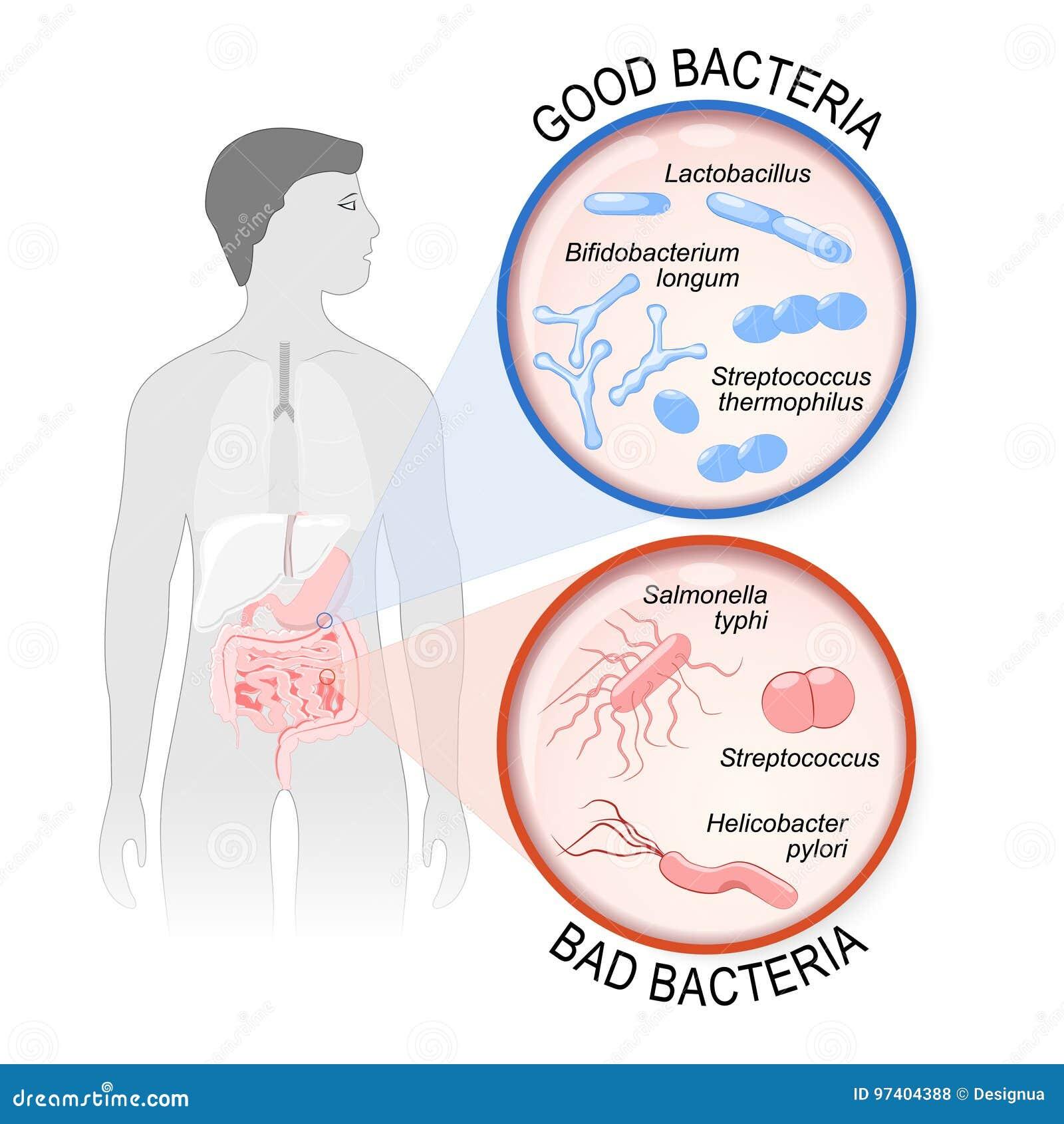 Probiotici flora dell intestino: Buoni e cattivi batteri