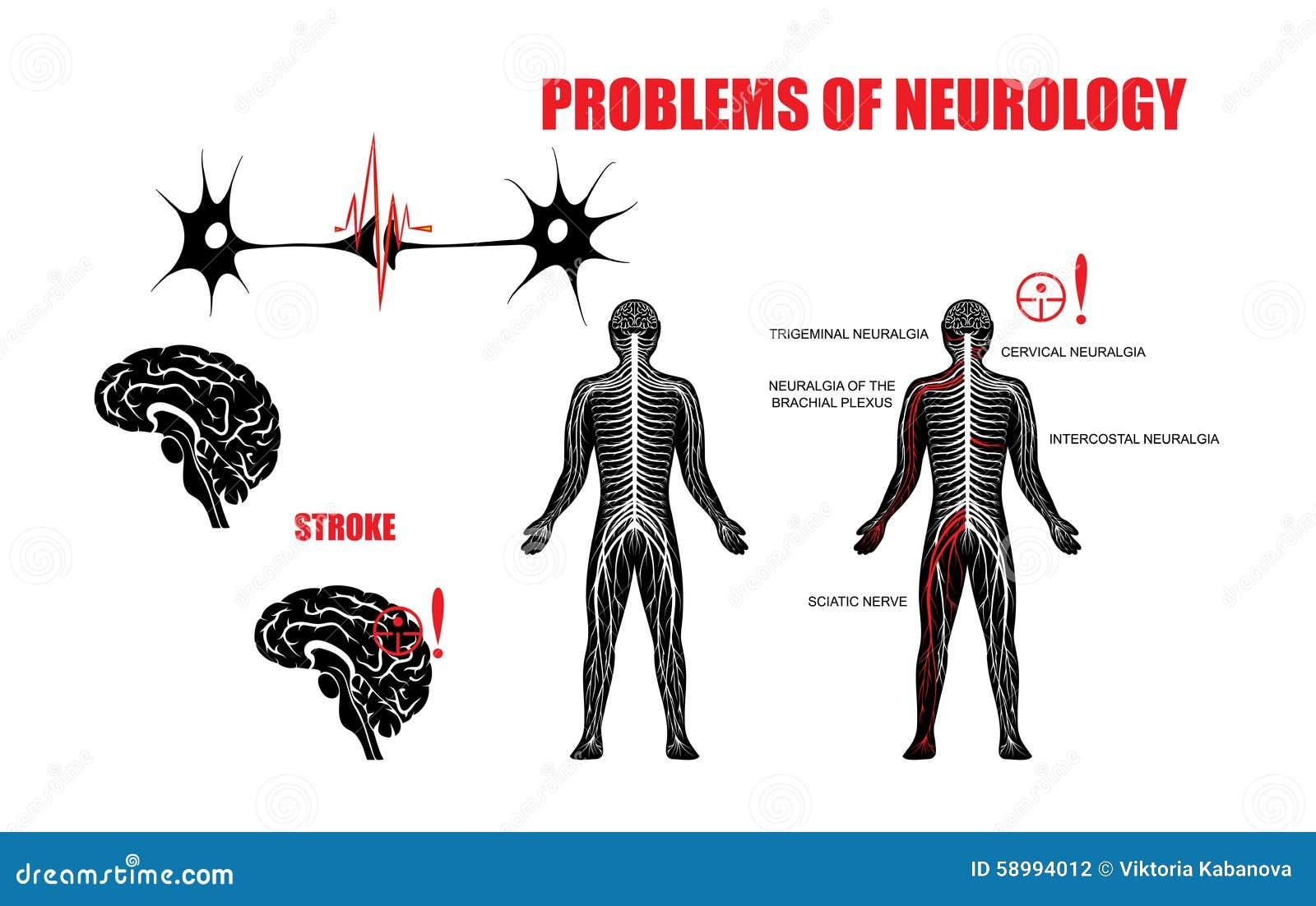 anatomical brain illustration
