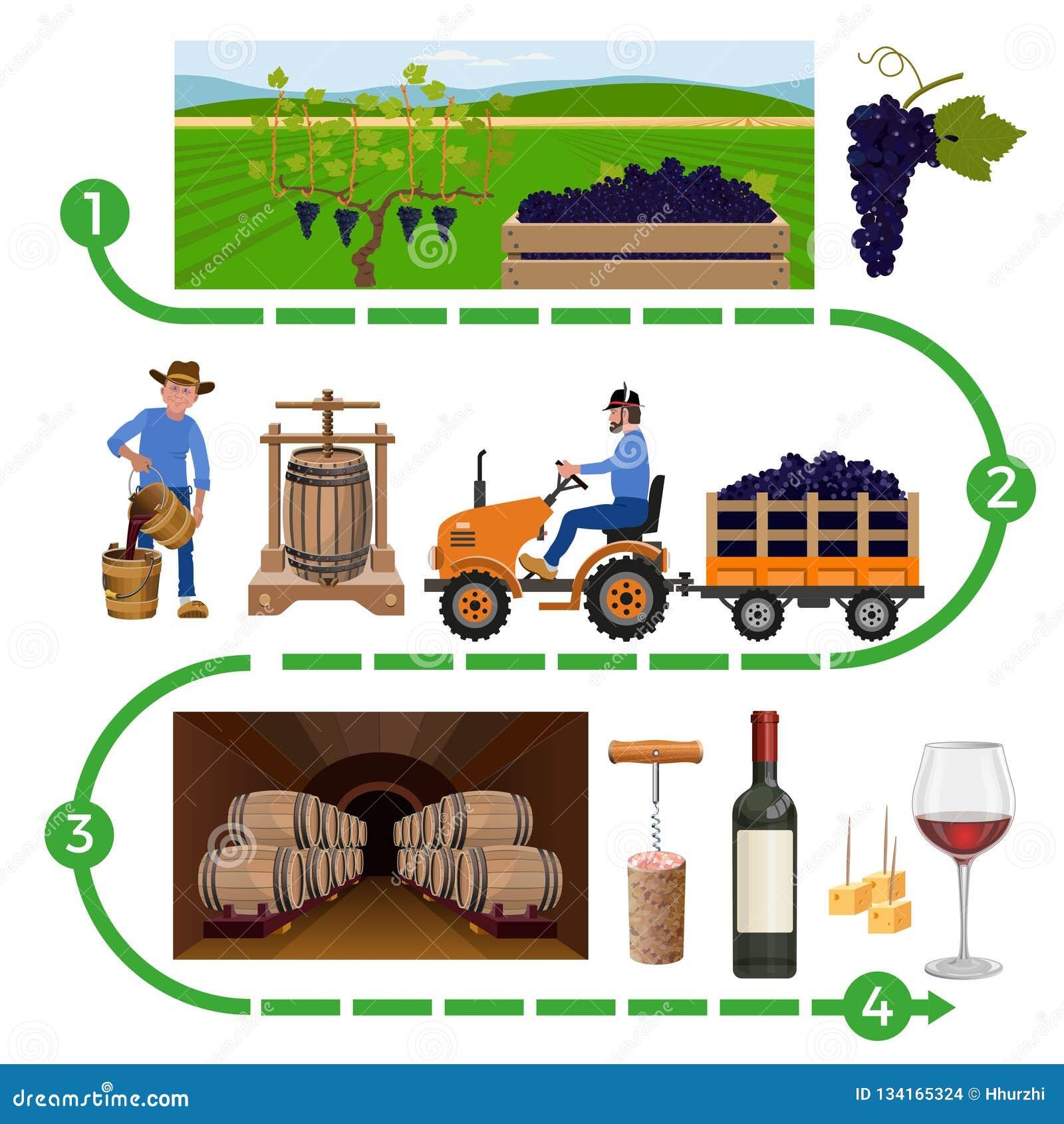 Procedimento de fabricação do vinho