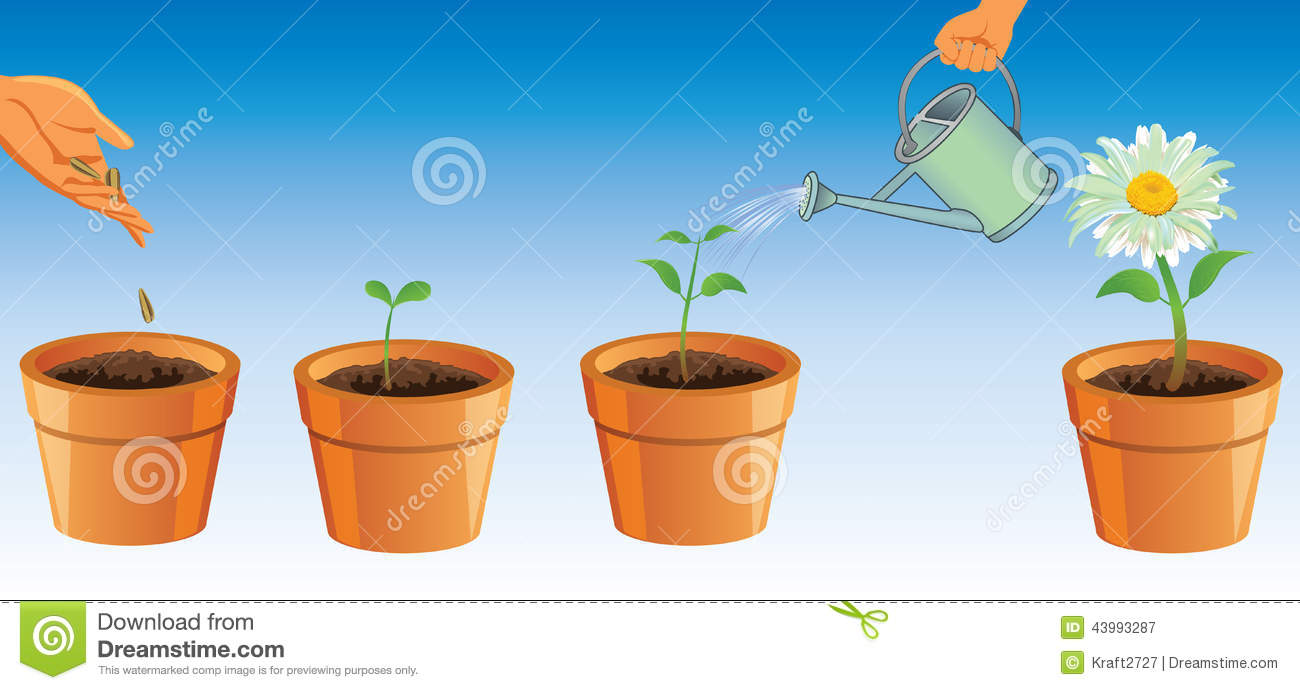 Small vegetable garden plans ideas - The Process Of Growth Of A Flower Growing Flowers Flowers In A Pot