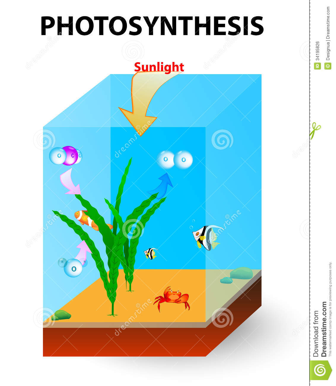 Process of photosynthesis in algae stock vector illustration of process of photosynthesis in algae pooptronica