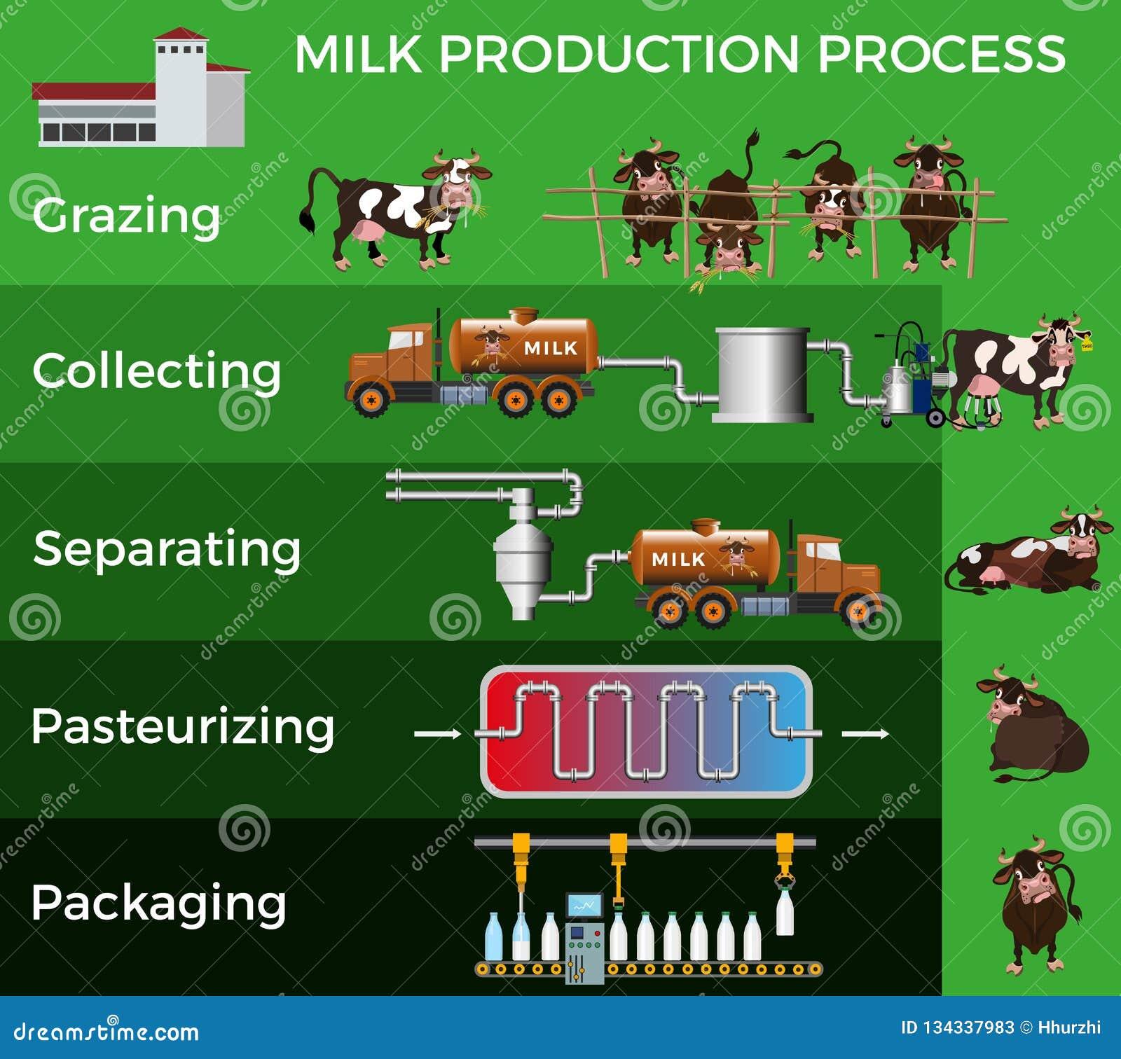 Processo de produção do leite