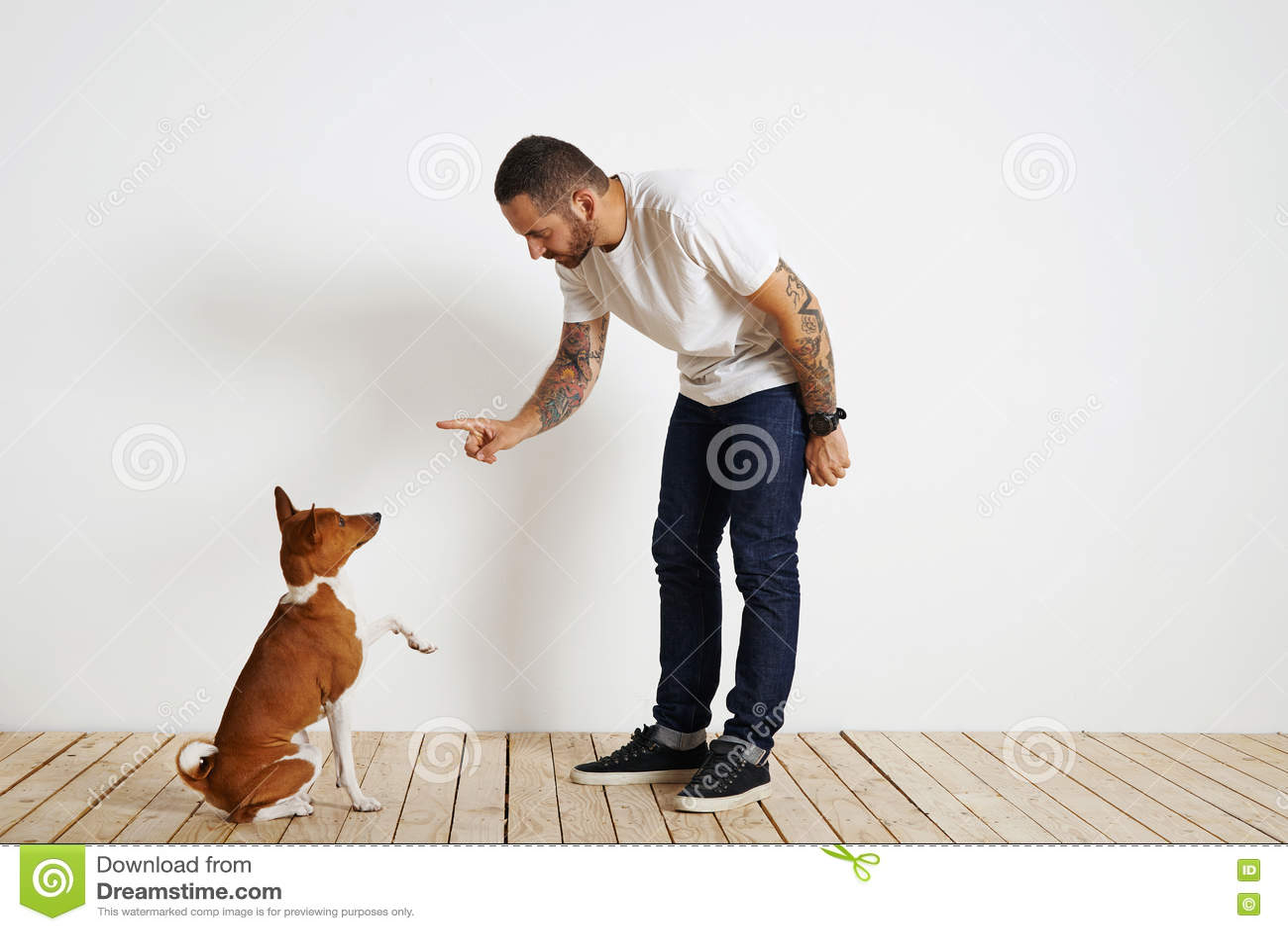 Processus de formation de chien à la maison