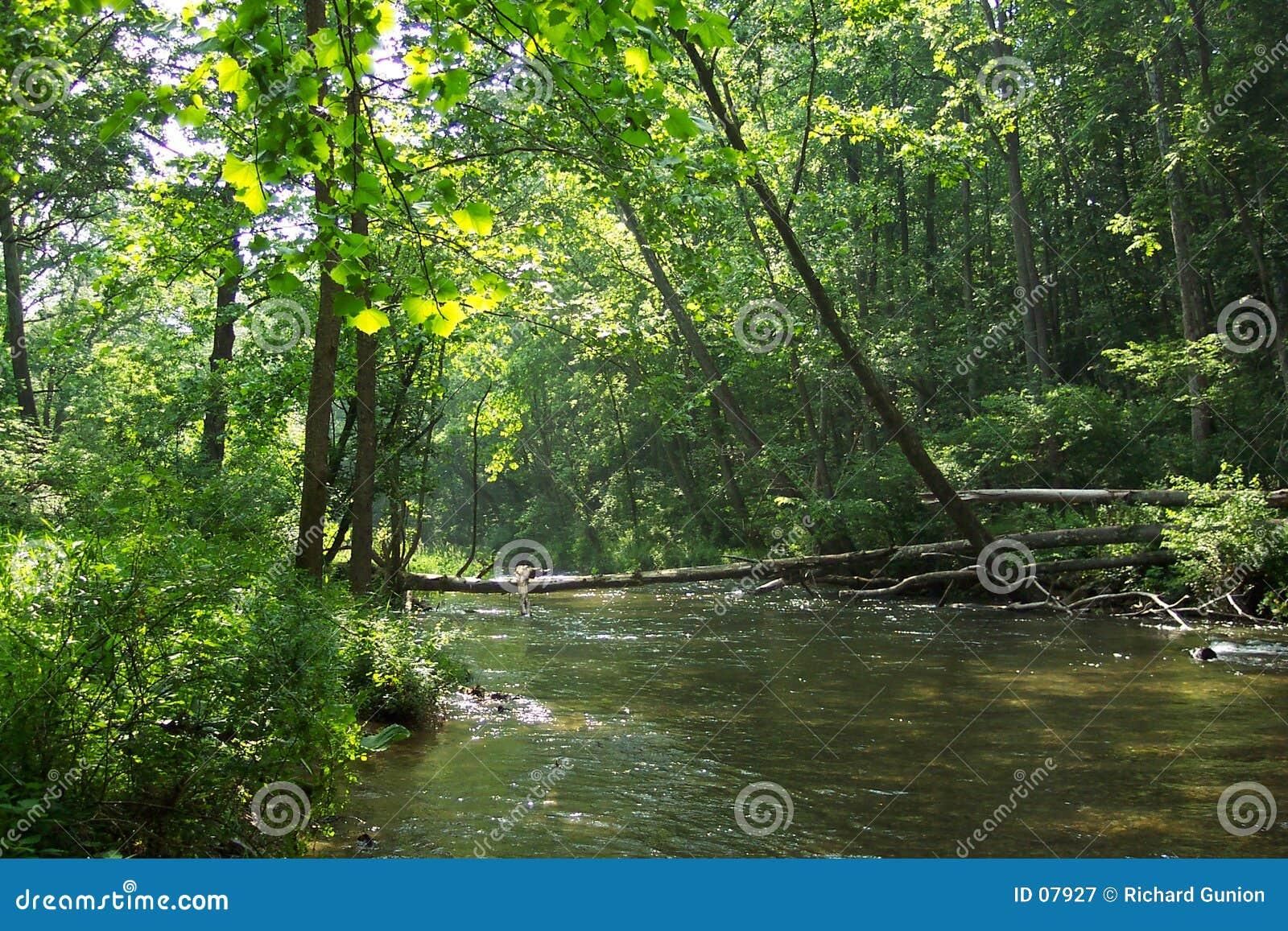 Proch rzeki drzewa