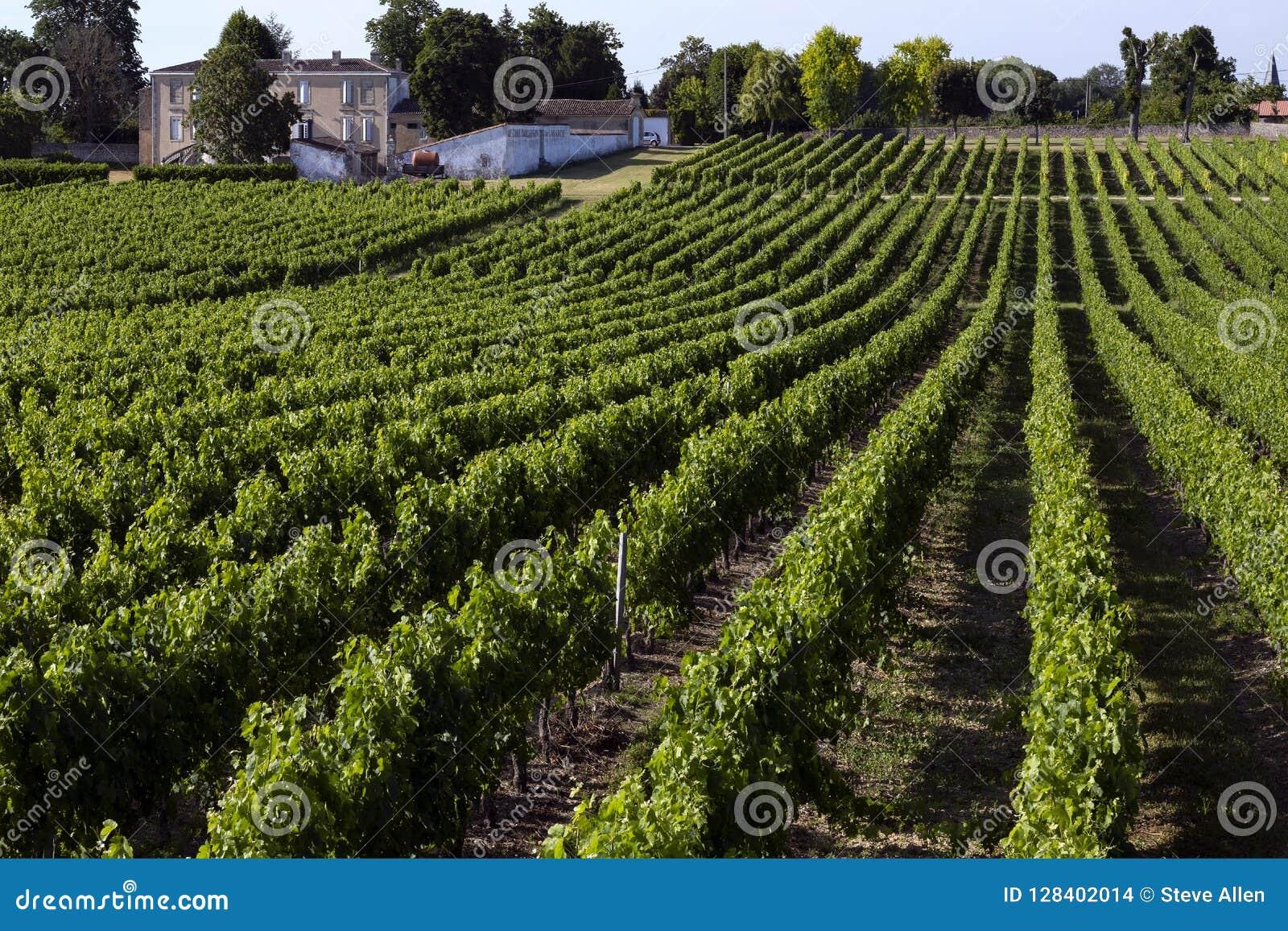 Produção de vinho - vinhedo - Dordogne - França