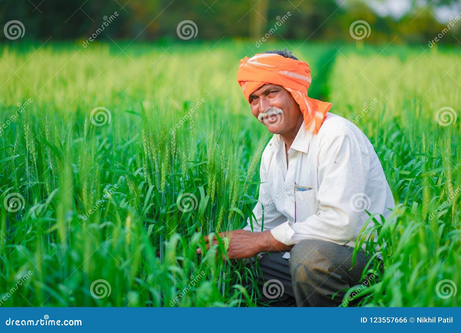 Producteur indien tenant la plante cultivée dans son domaine de blé
