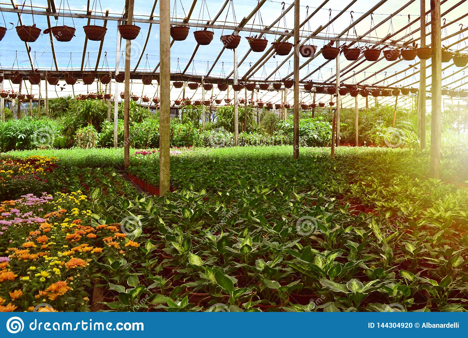 Productor del cuarto de niños de plantas y de árboles