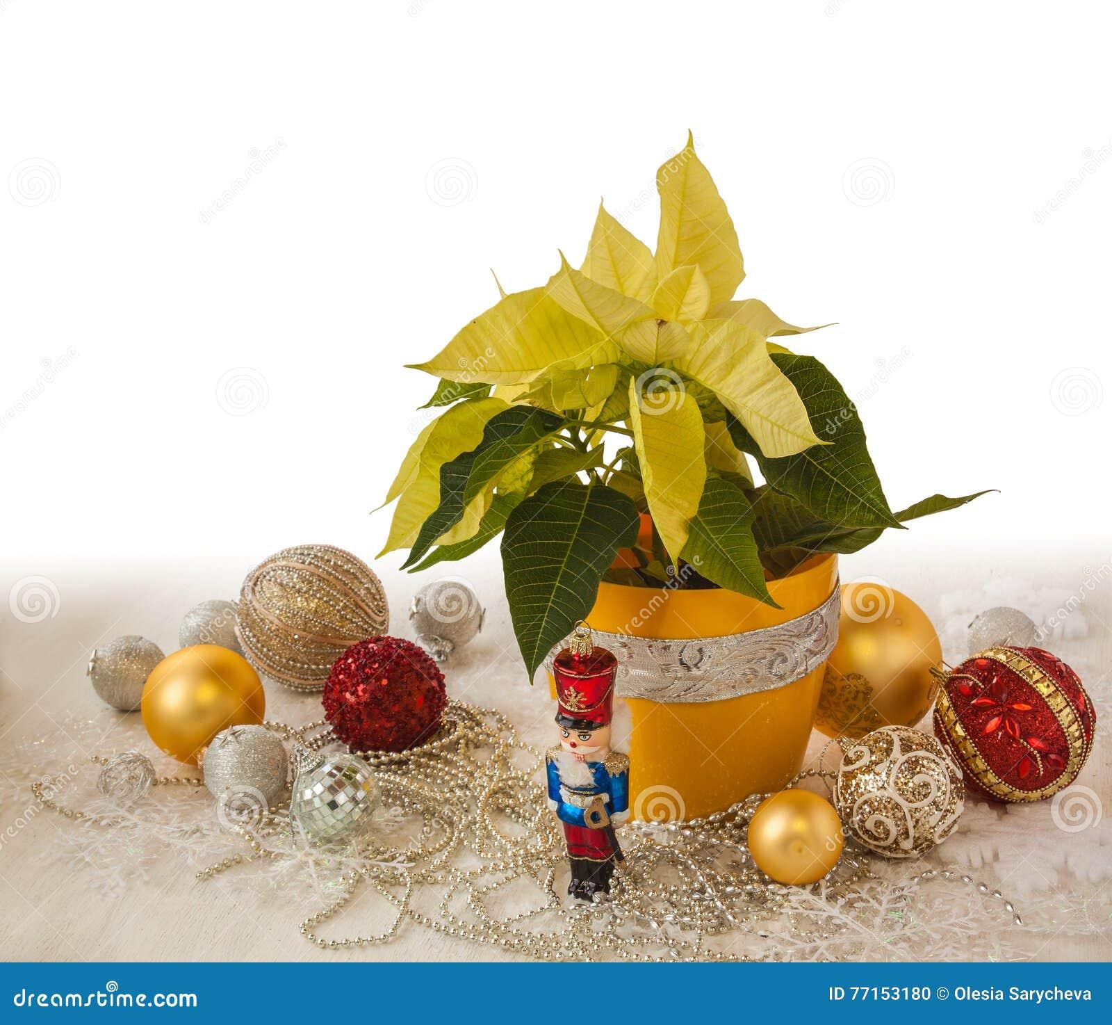 Produits de décorations jaunes de poinsettia et de Noël de la masse
