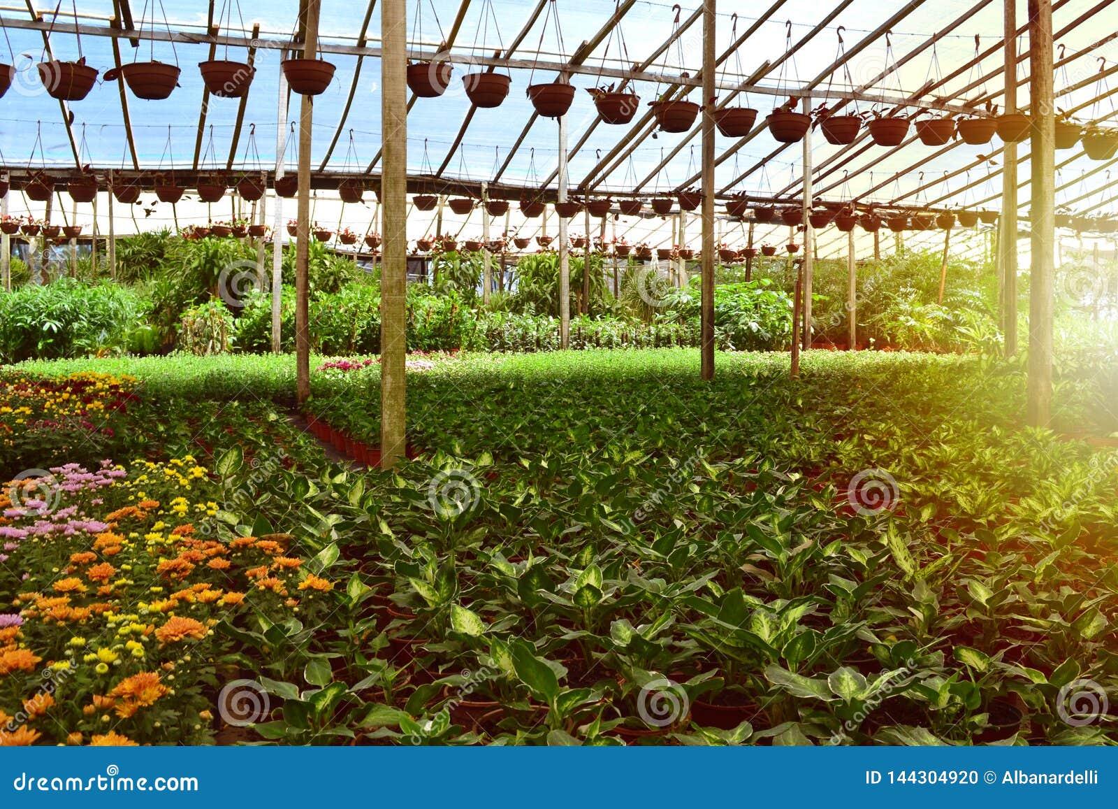 Produtor do berçário das plantas e das árvores