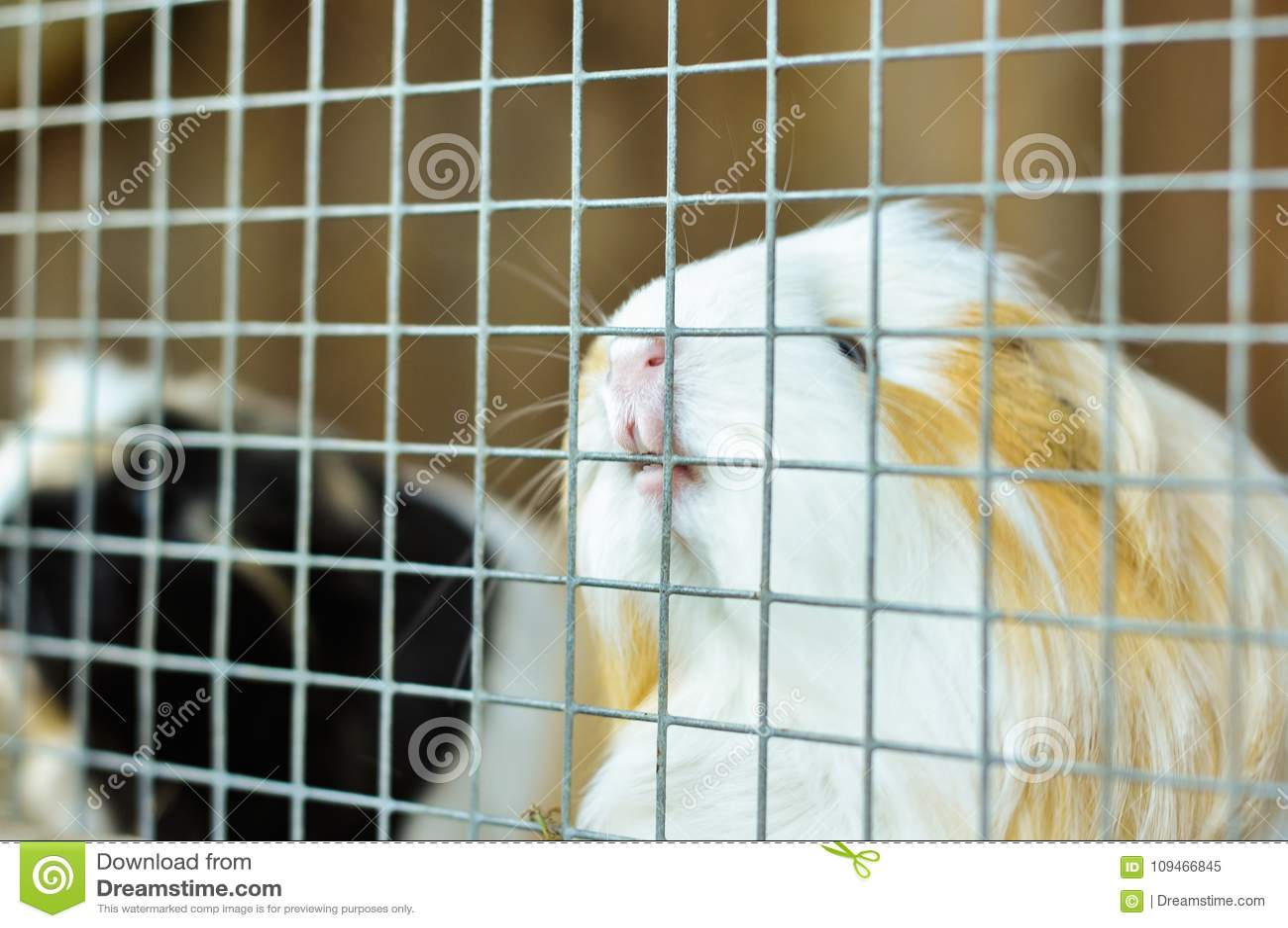 Proefkonijn het bijten op de bars van zijn kooi