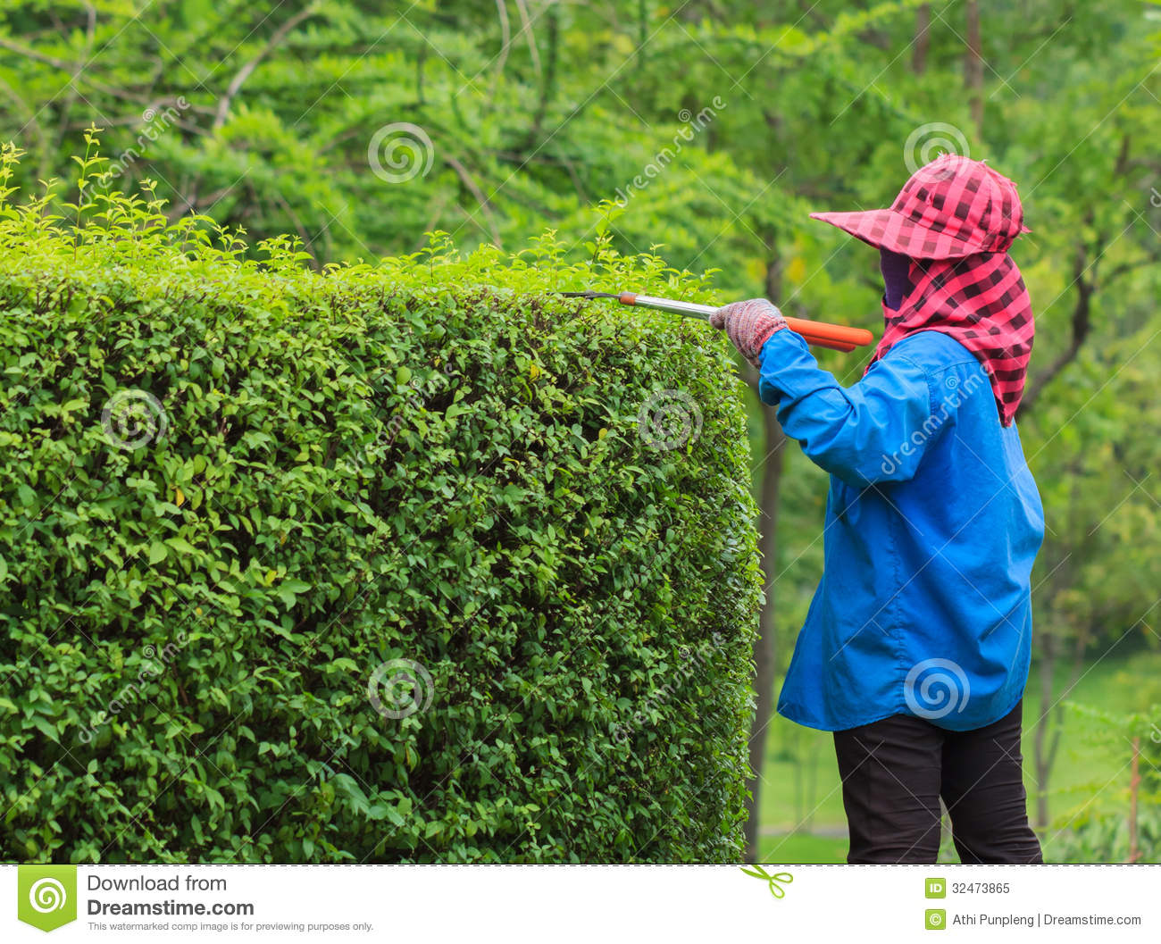 Professional Gardener Pruning An Hedge Royalty Free Stock