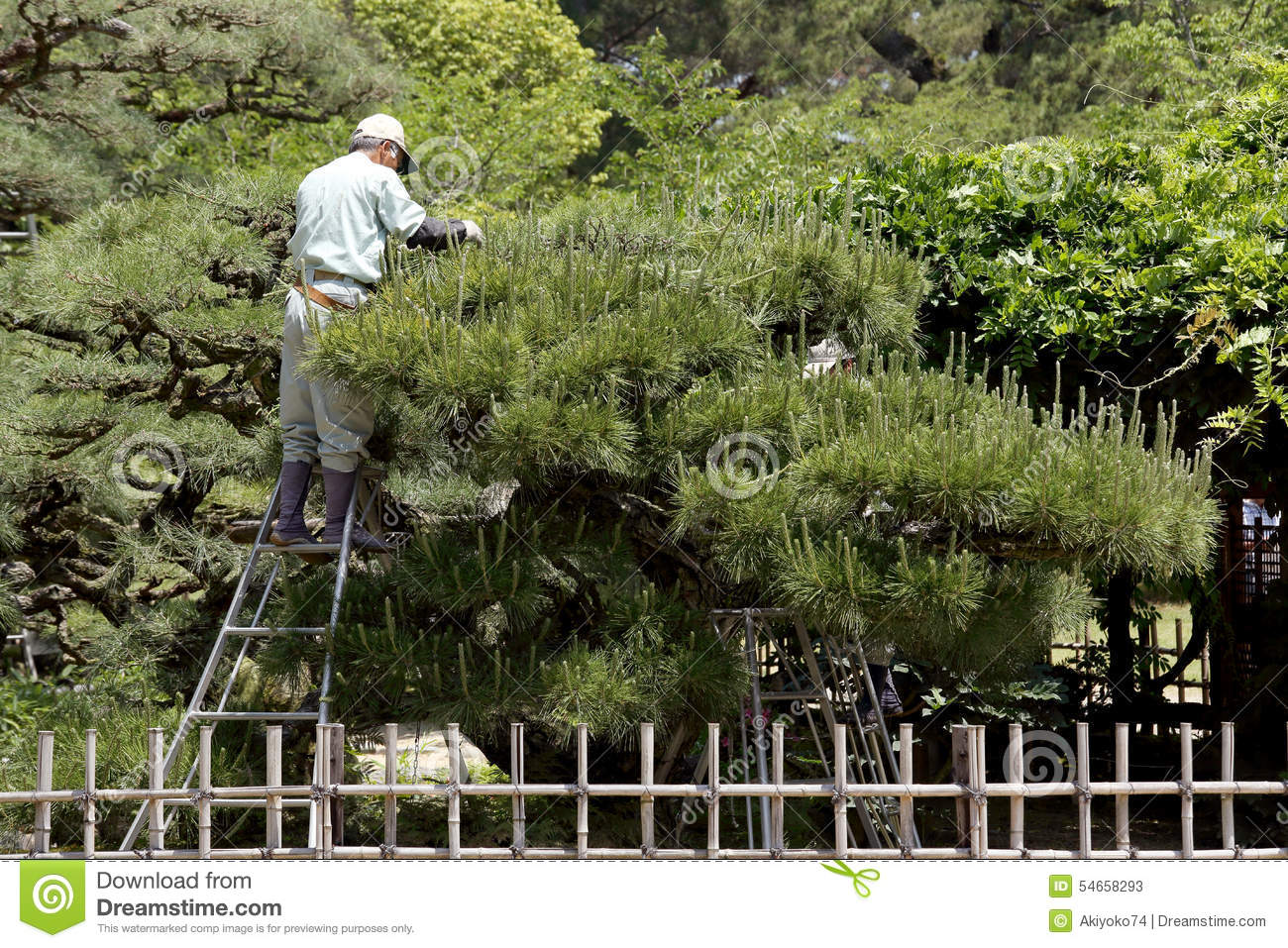 Professional Gardener Pruning A Tree Editorial Stock Photo
