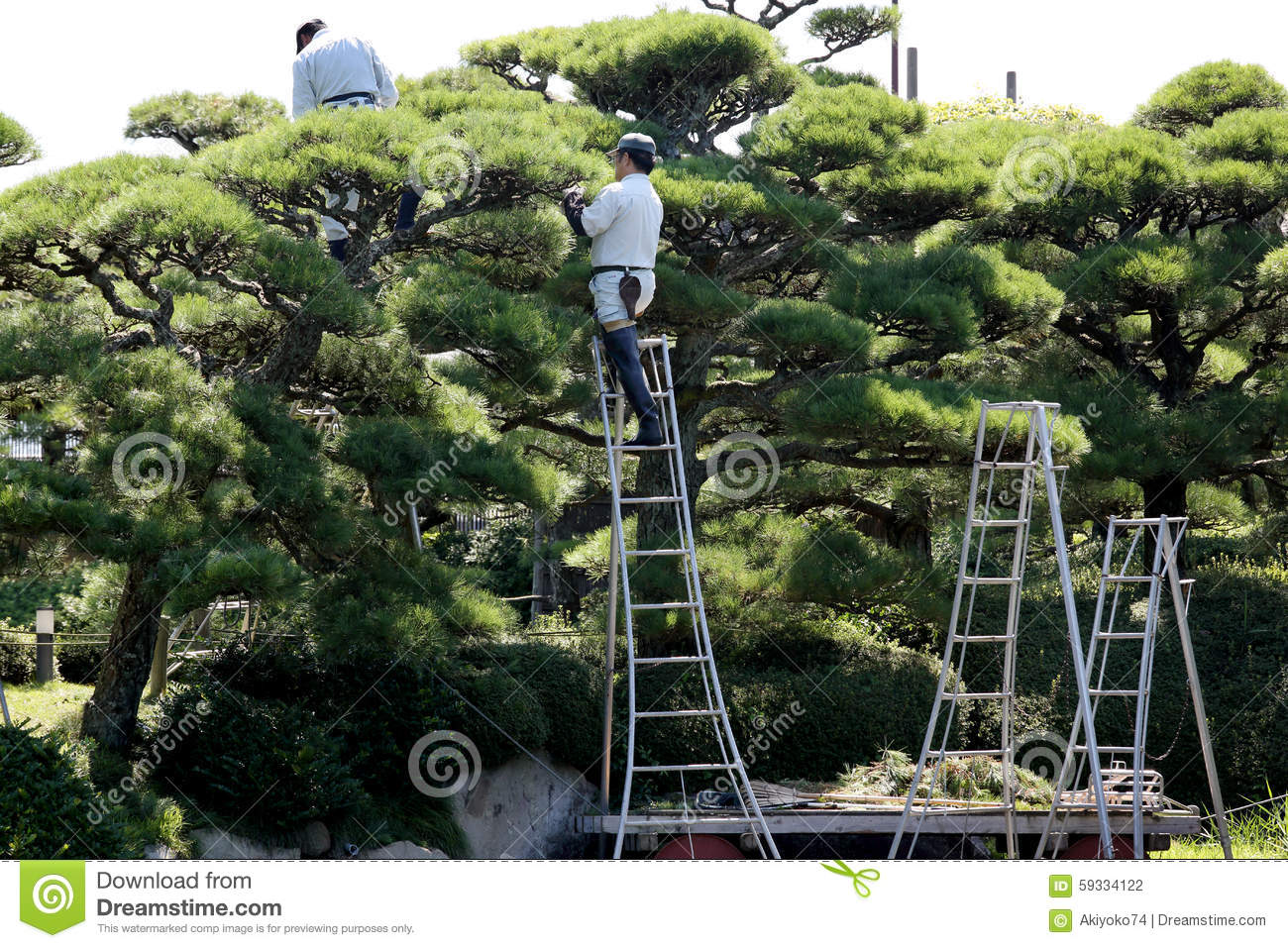 Professional Gardener Pruning A Tree Editorial Photography