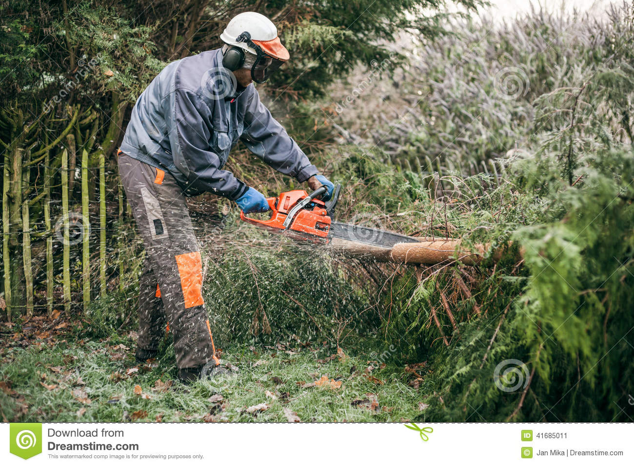 Tractor Man On Cutting Trees : Professional gardener using chainsaw stock photo image
