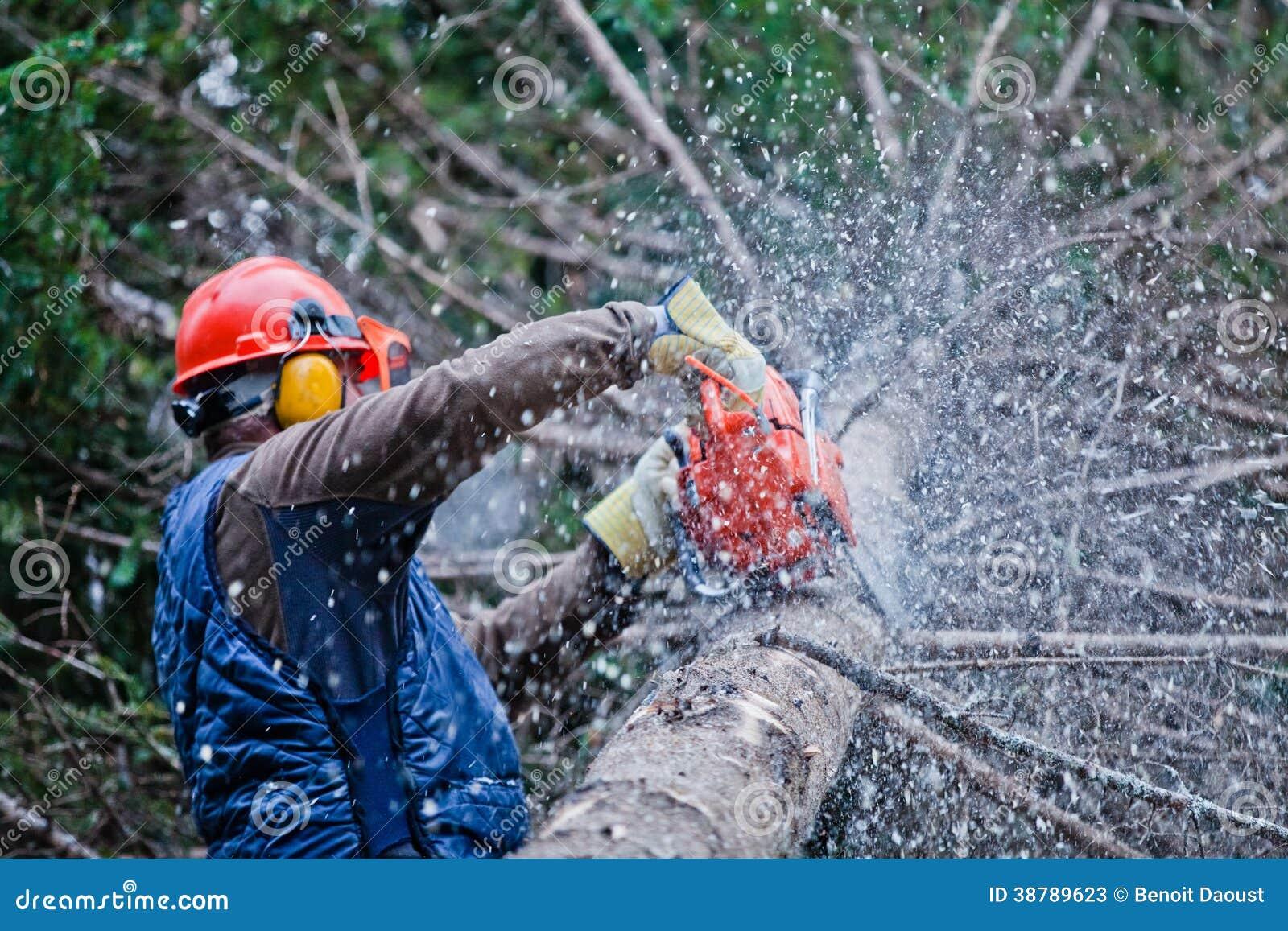 Professional Lumberjack Cutting A Big Tree Stock Photo
