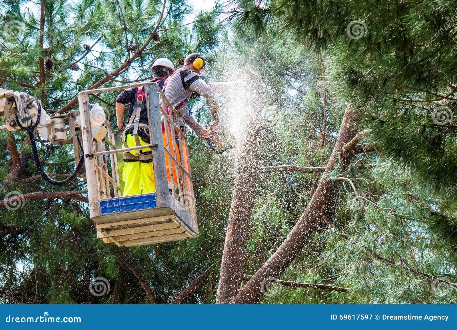 Professional Lumberjacks cuts trunks on the crane