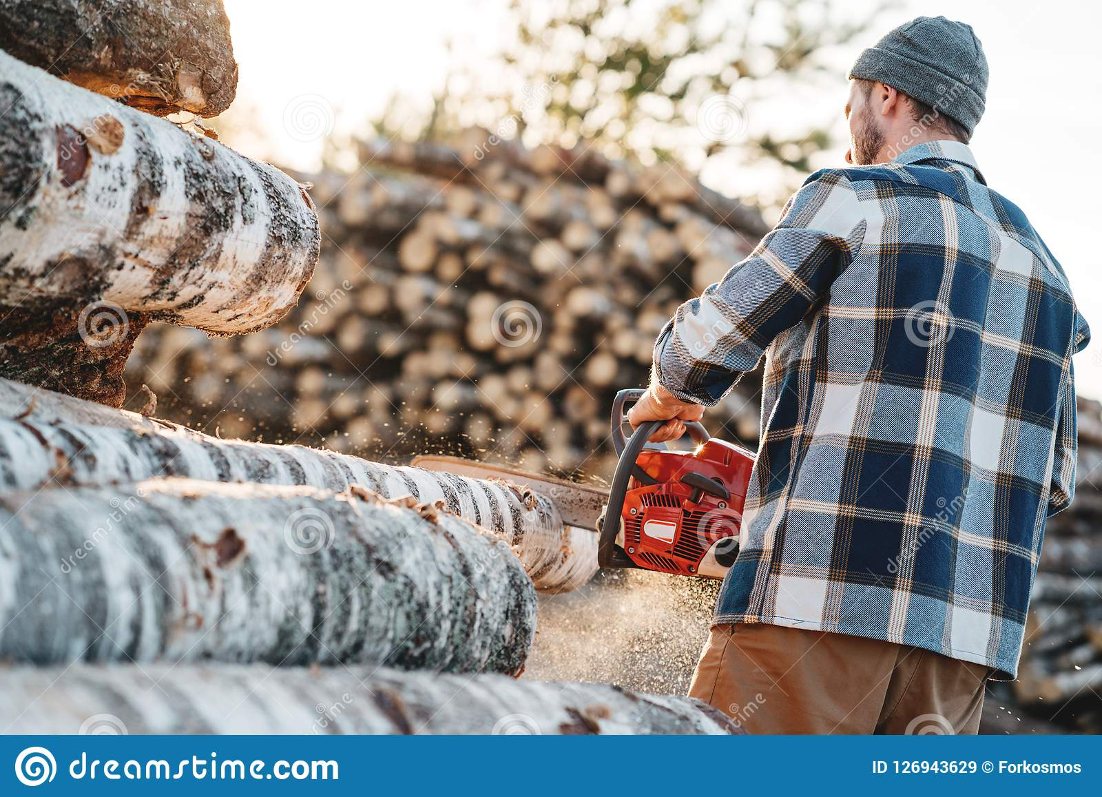 Professional strong lumberman wearing plaid shirt sawing tree with chainsaw for work on sawmill