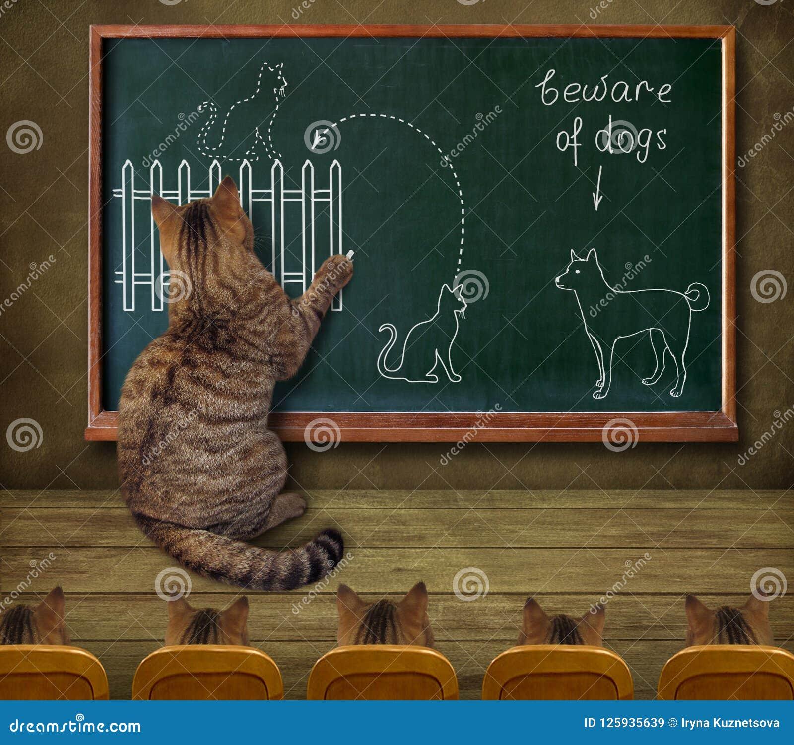 Professor do gato e seus alunos