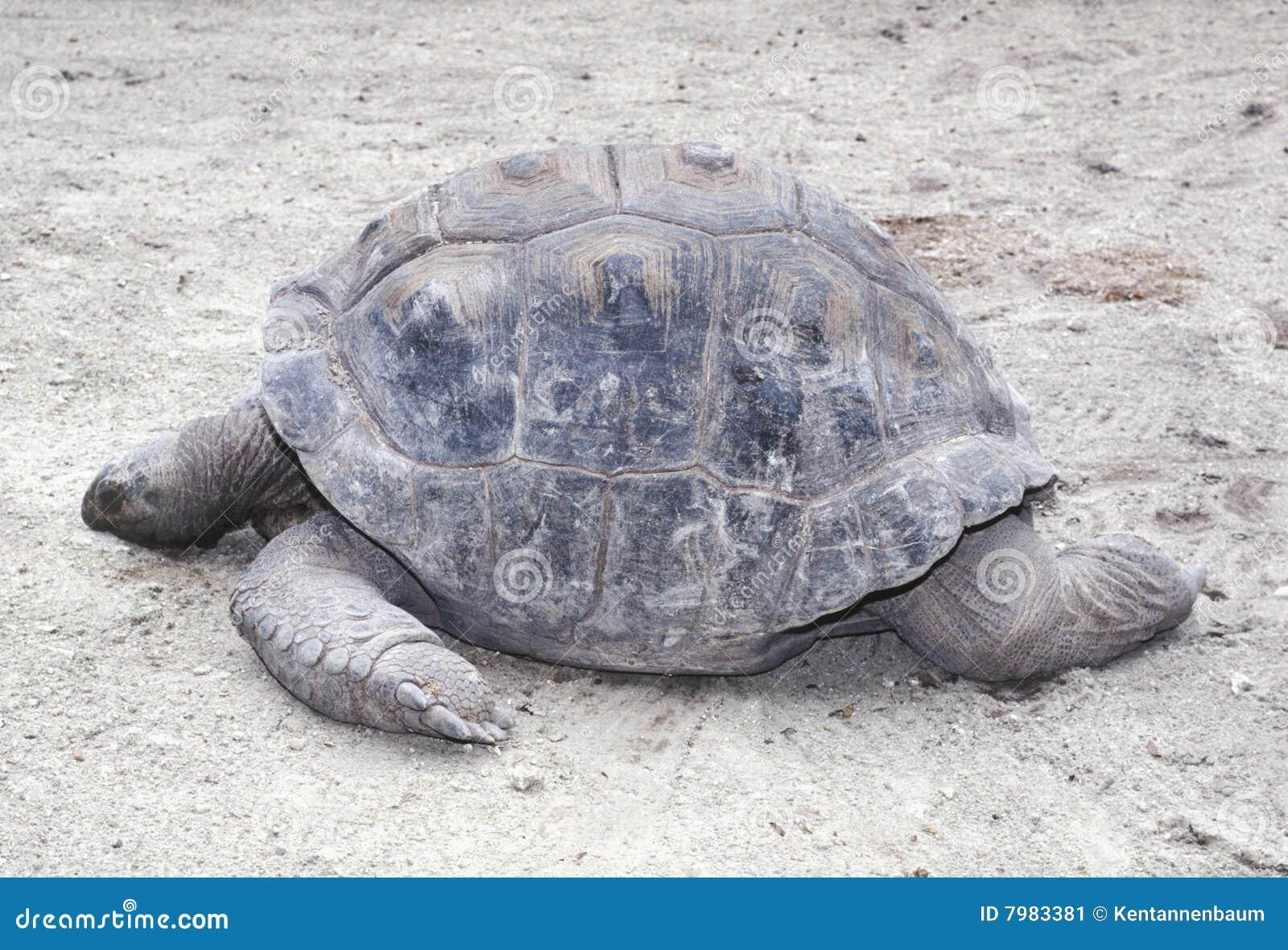 Profiel van de Oostelijke Schildpad van de Doos