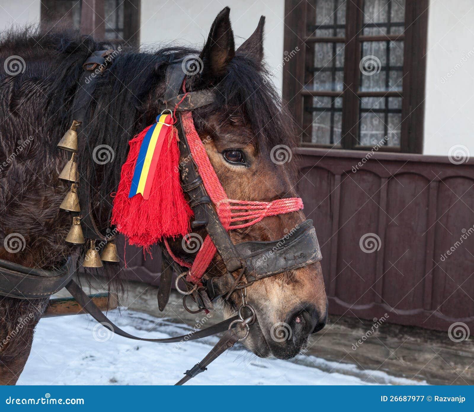 Profiel van een Traditioneel Roemeens Paard