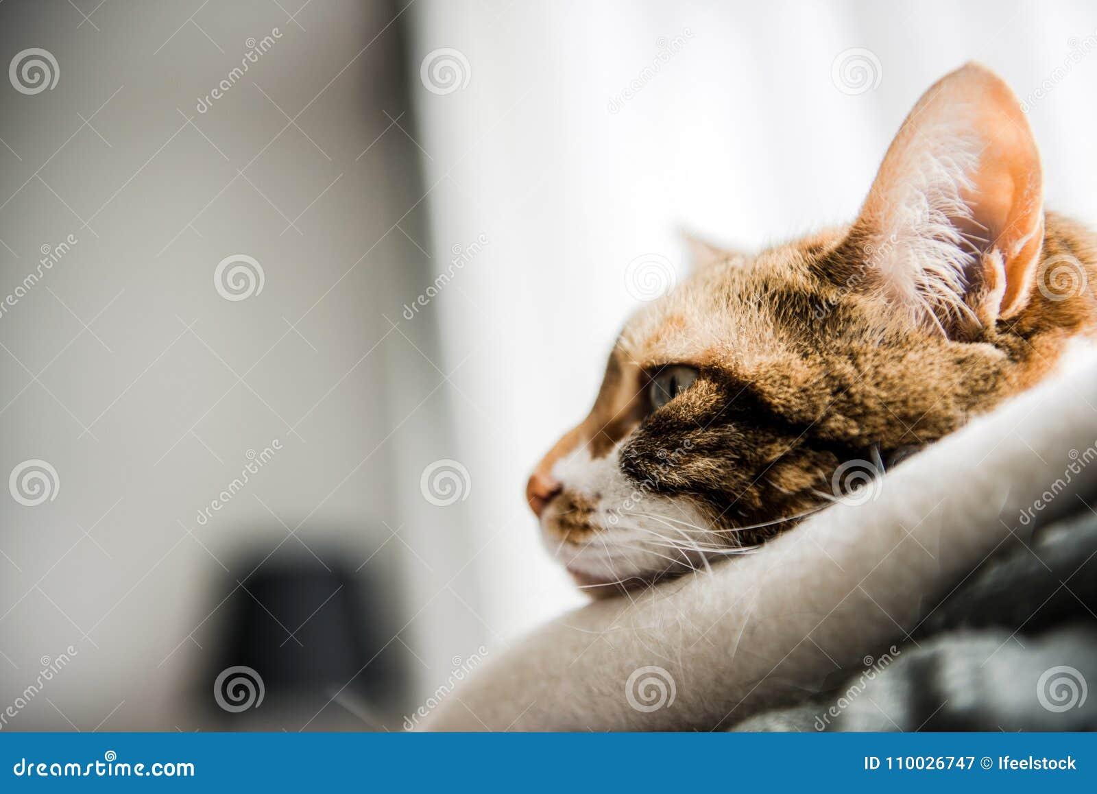 Profielmening van leuke kat met grappig gezicht