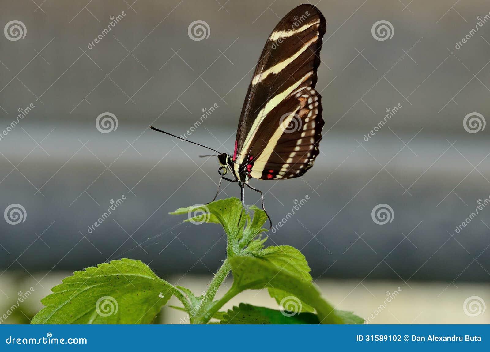 Profil av en fjäril på ett blad