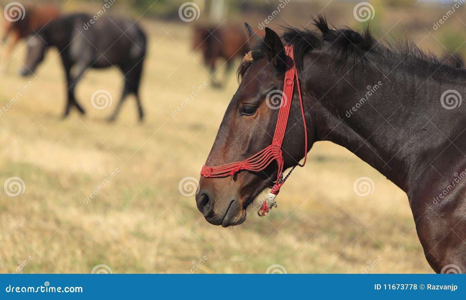Profil d un cheval