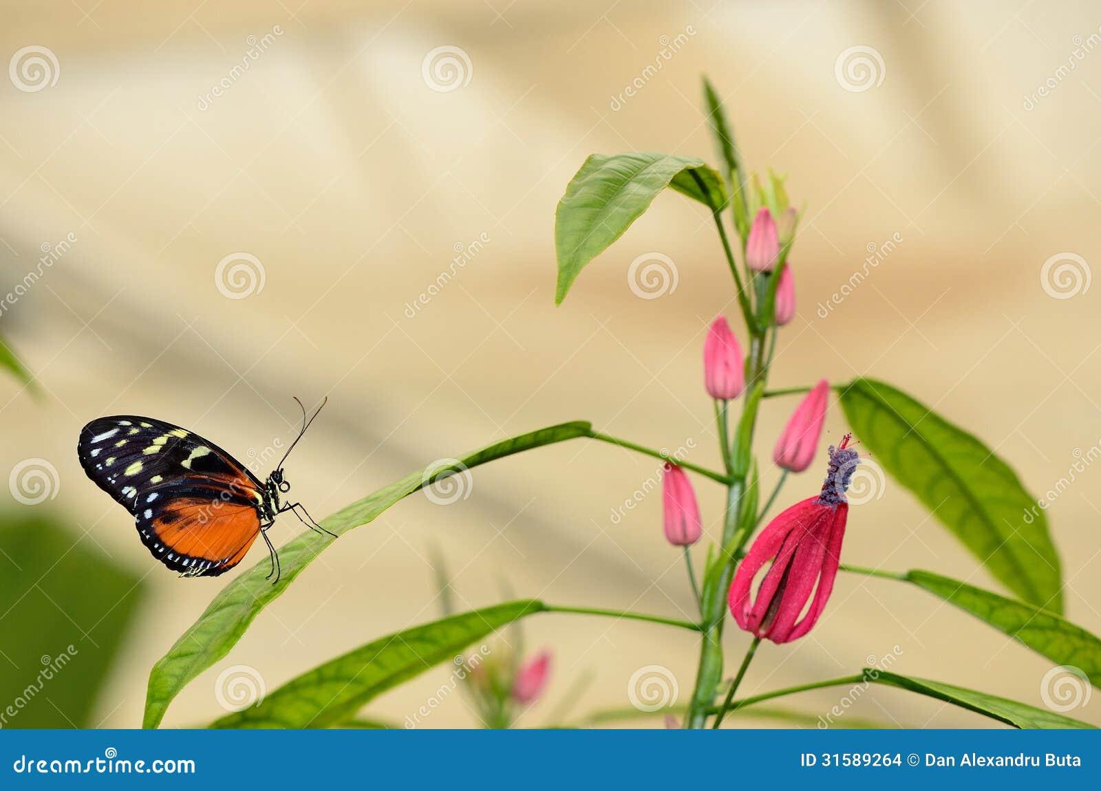 Profil d un papillon sur une feuille