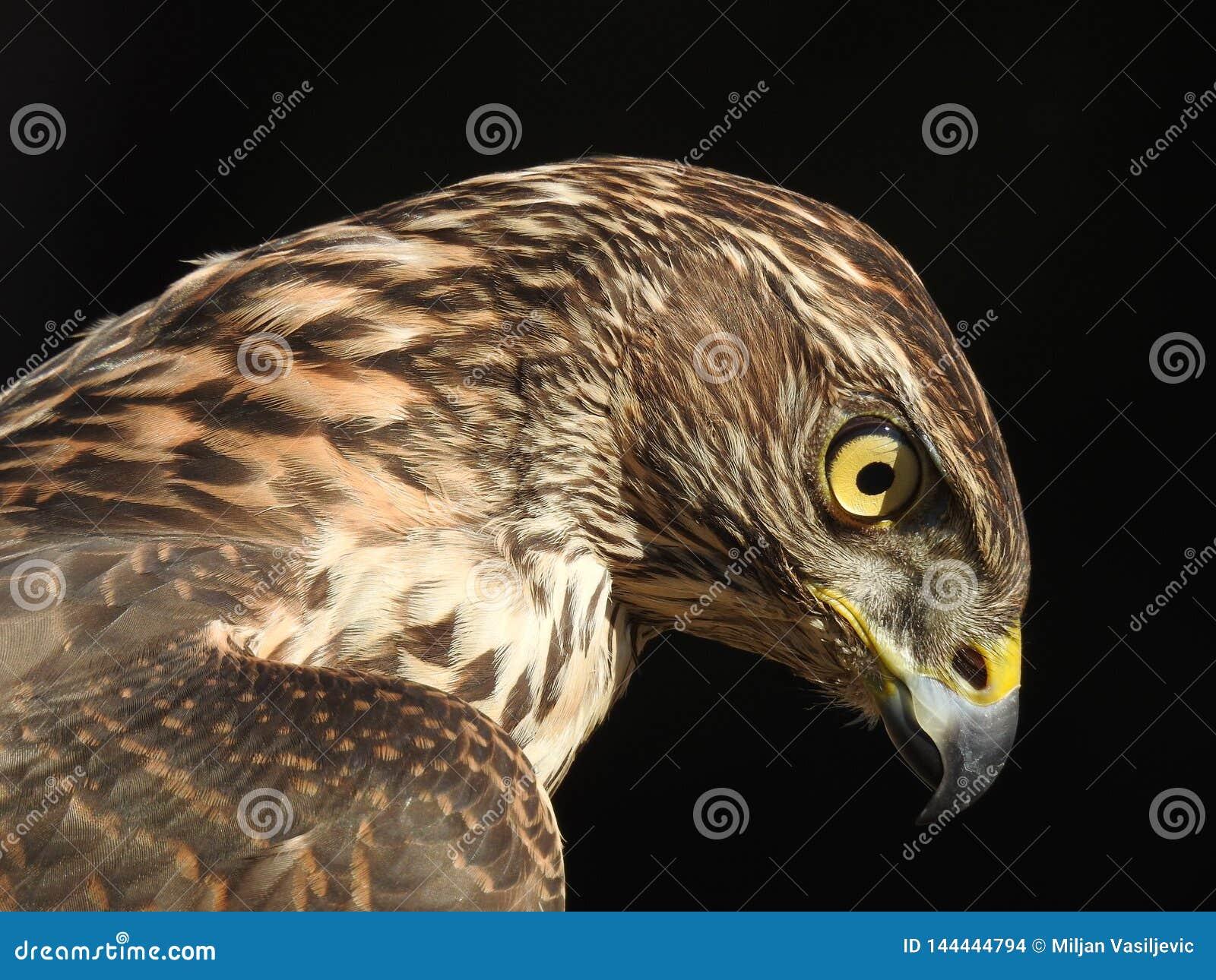 Profil de l oiseau le plus bel au monde