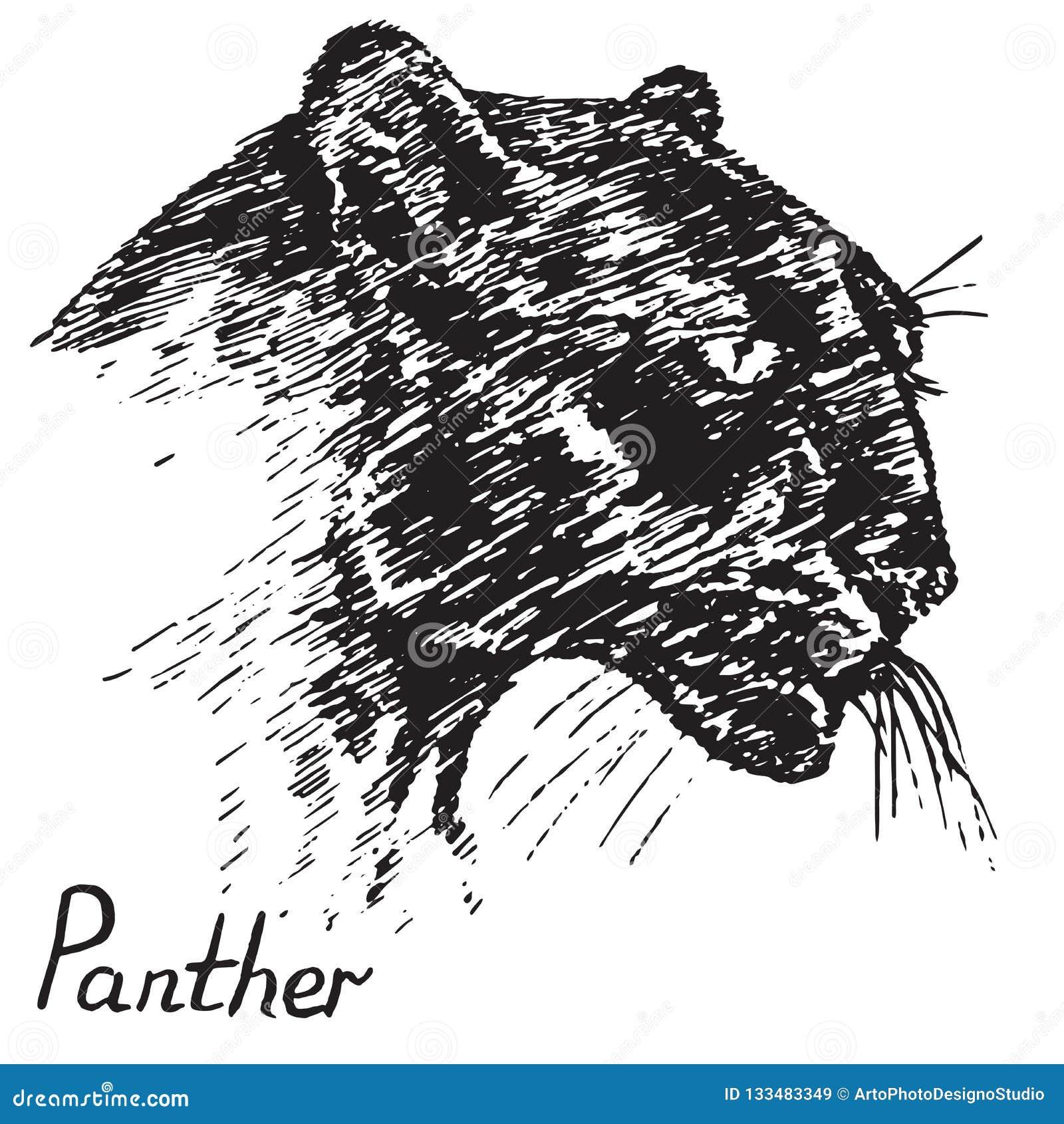 Profil De Visage De Panthere Noire Griffonnage Tire Par La Main