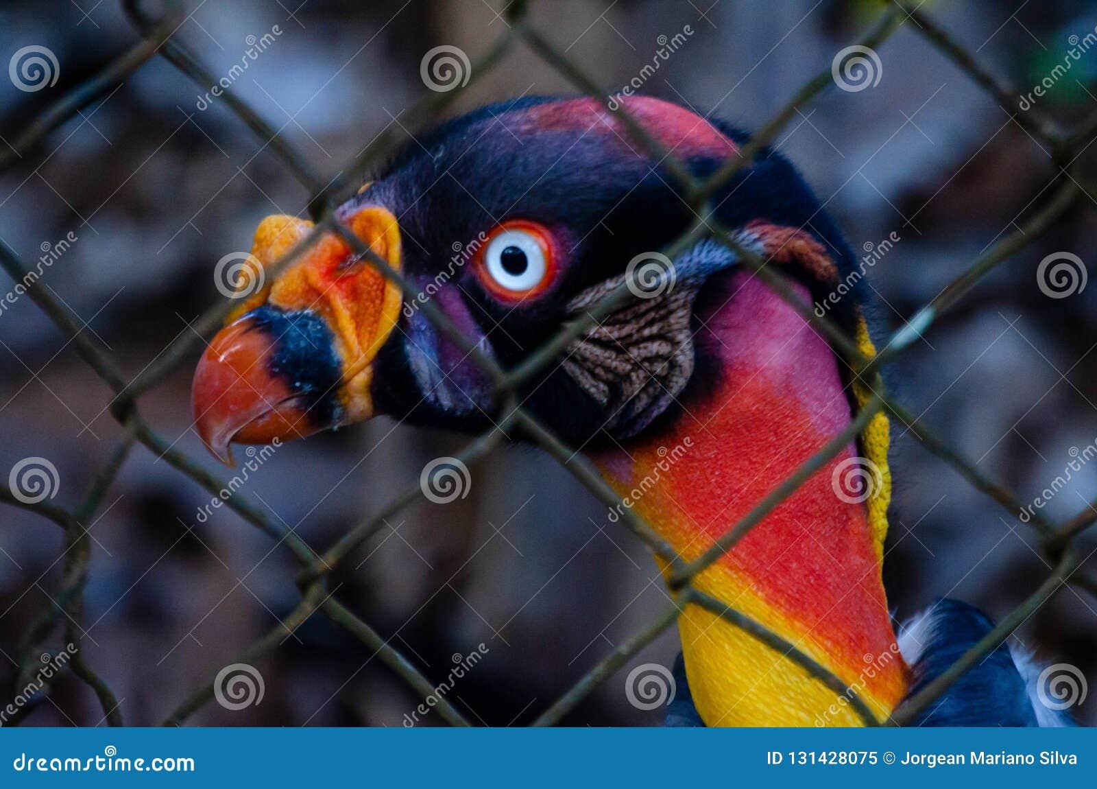 Profil du Roi Vulture emprisonné entre les grilles, portrait