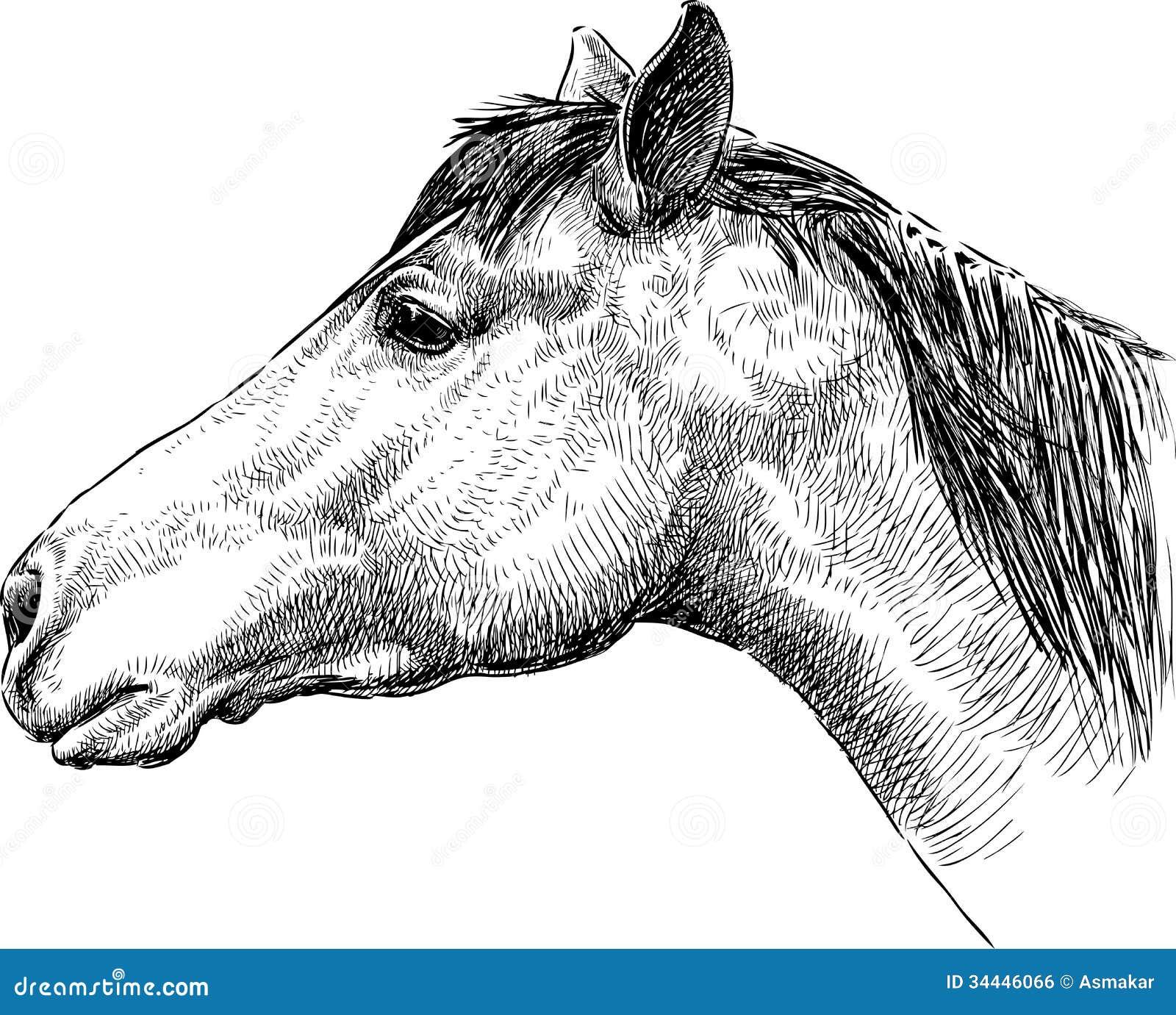 disegni a matita facili animali