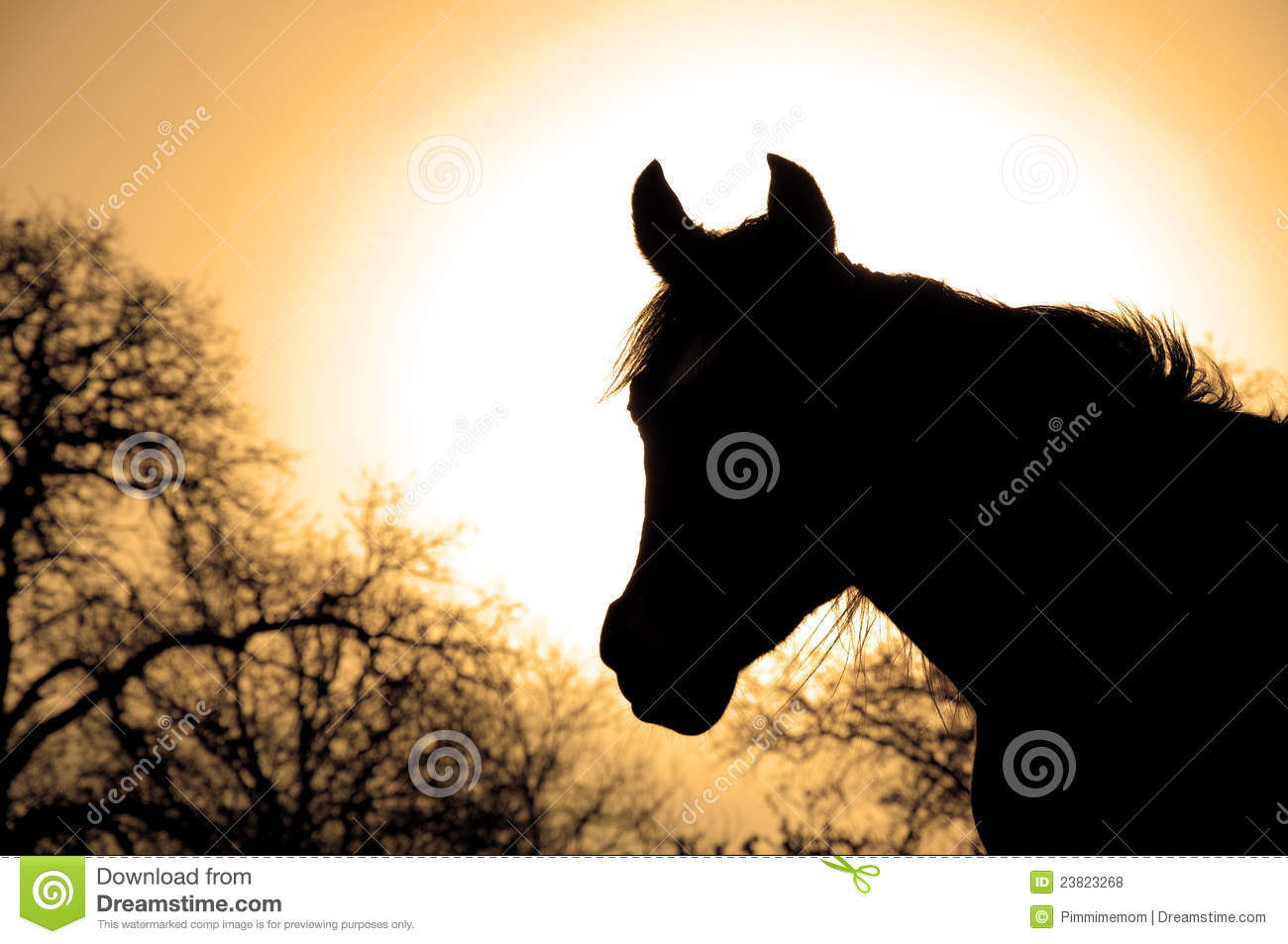 575 Profile Beautiful Arabian Horse Photos Free Royalty Free Stock Photos From Dreamstime