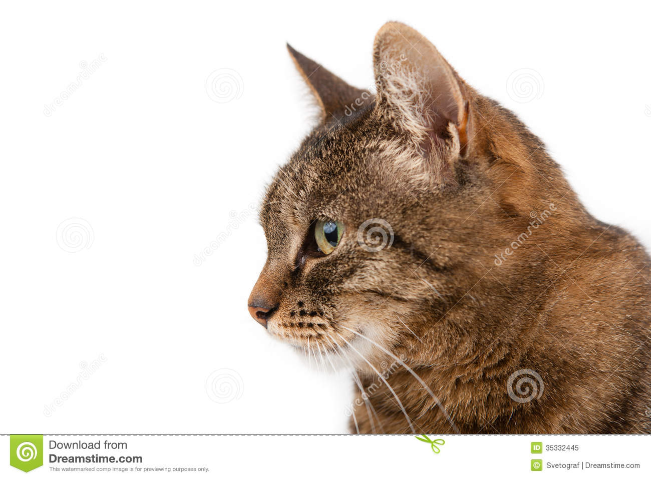 Profile Of A Cat Royalty Free Stock Photo Image 35332445