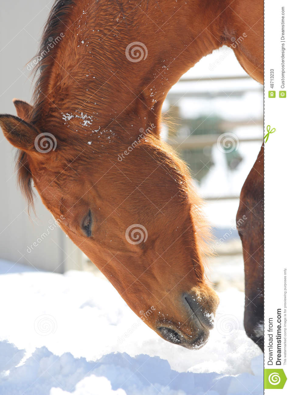 Download A Profile Of A Horse With His Eyes Closed In The Snow. Stock Image - Image of simple, view: 48713233