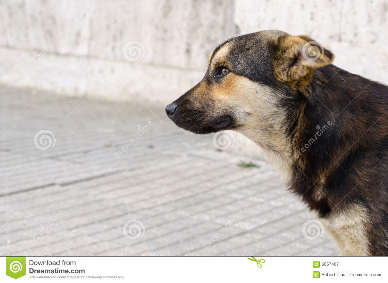 Profile portrait of a dog with no owner. Stray mongrel dog