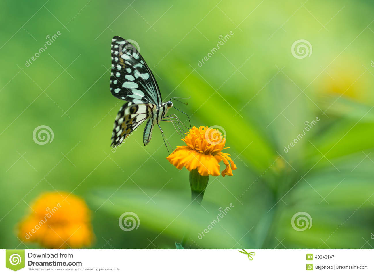 profile view of a beautiful butterfly on flower stock photo