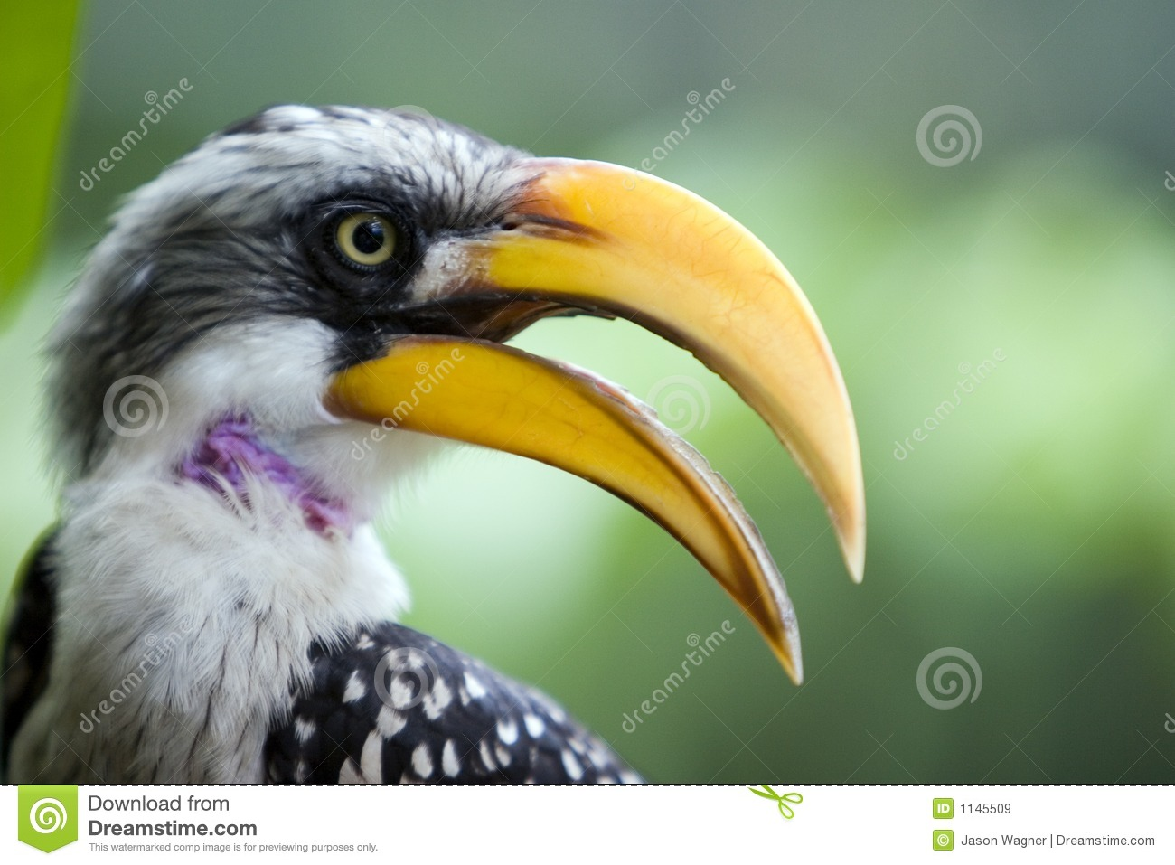Profile of Yellow Beak Bird