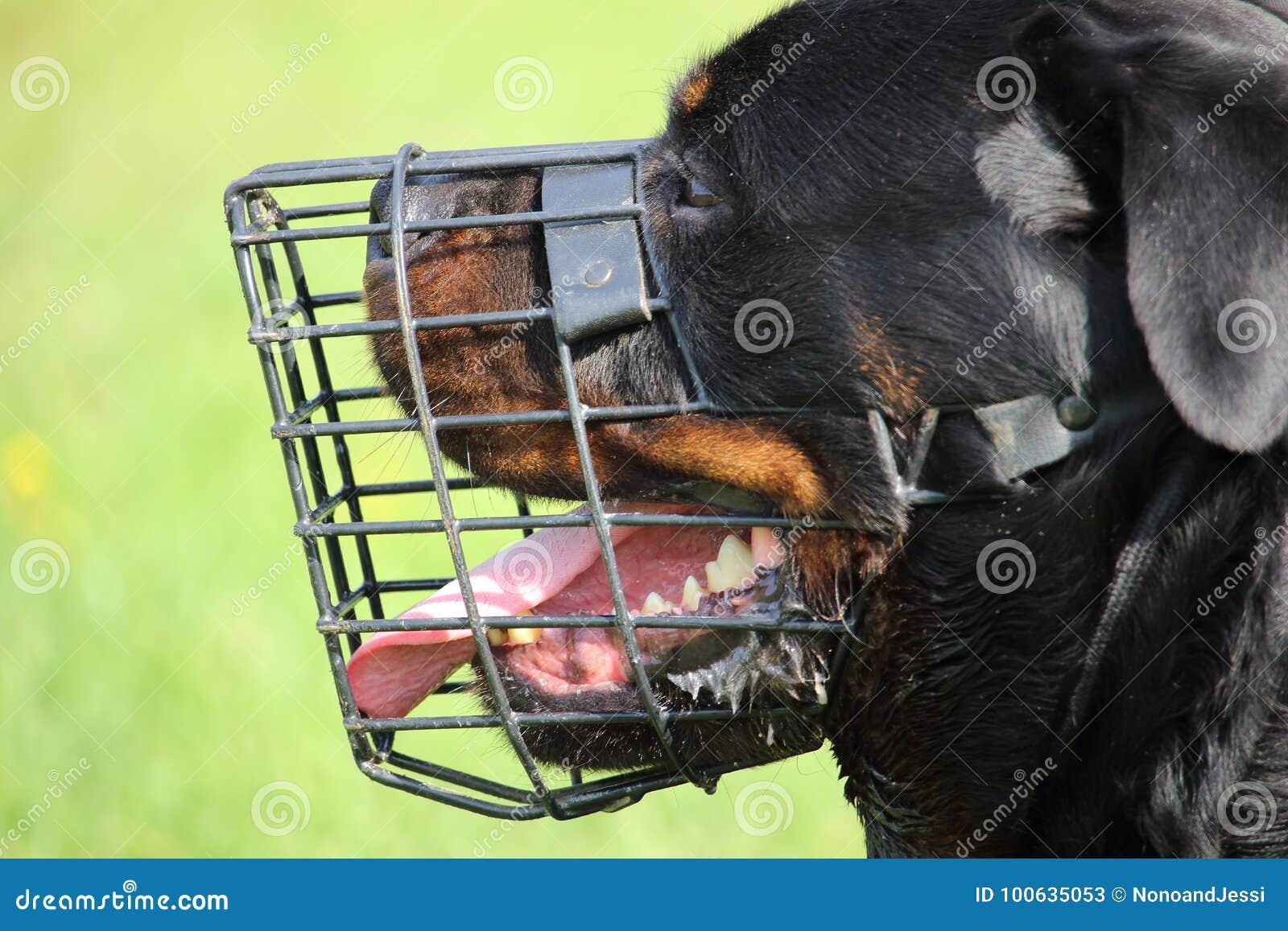 Profilen av huvudet av en rottweilerhund med ett ingrepp tystar ned